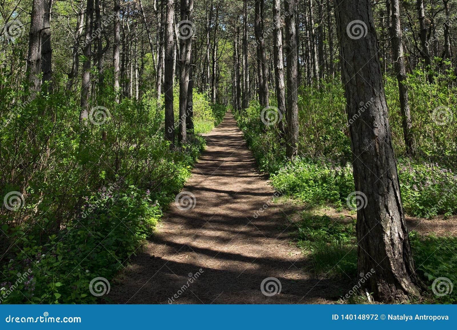 Путь в древесинах в полдень весной