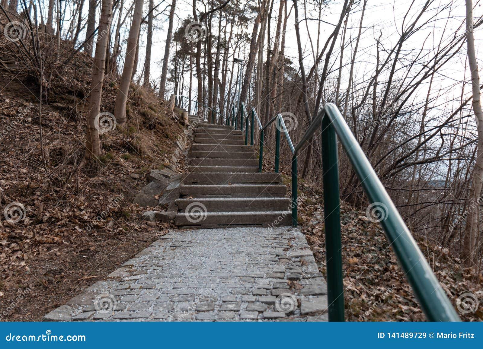 Путь через лес лестниц