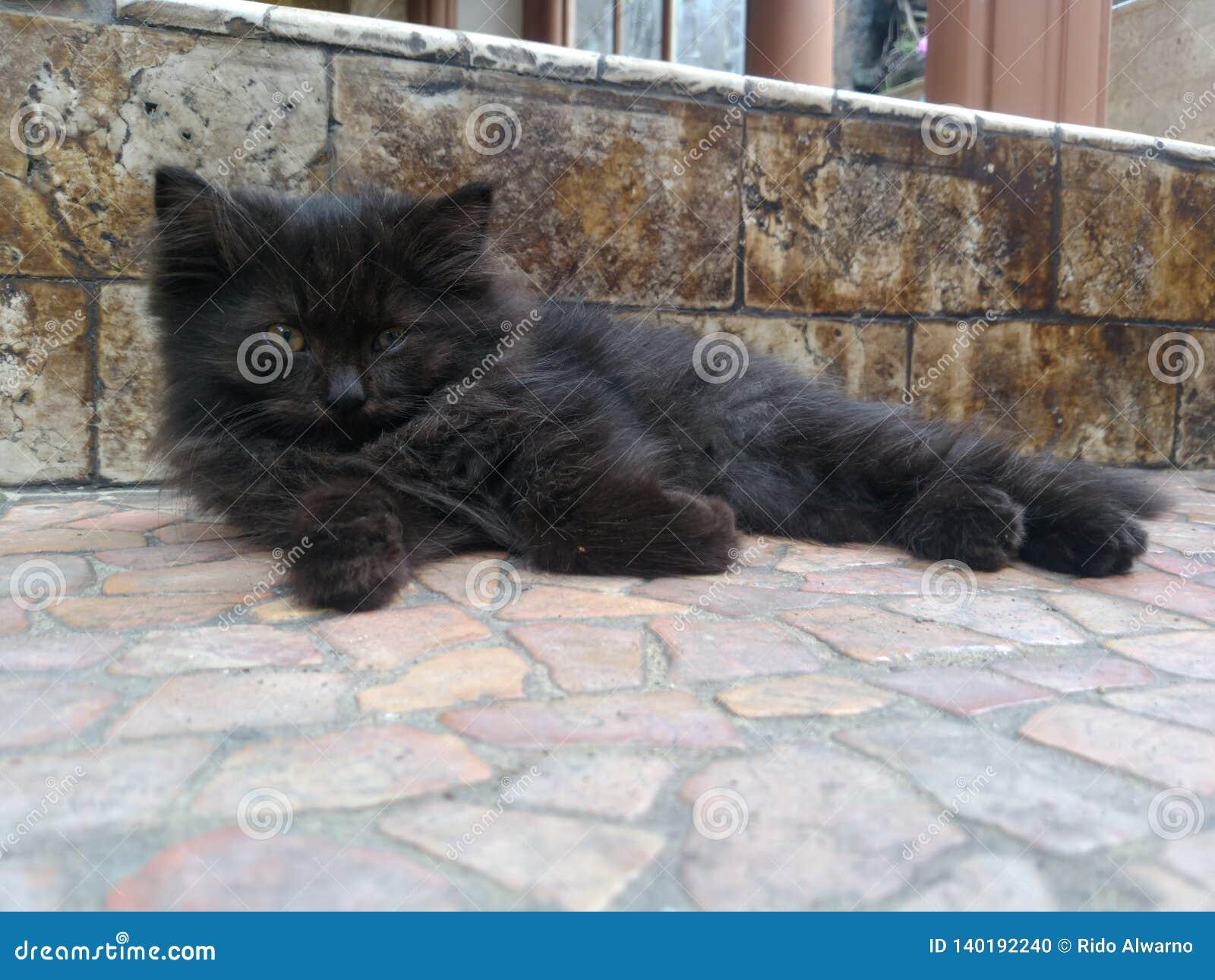 прелестный черный котенок лежа на поле