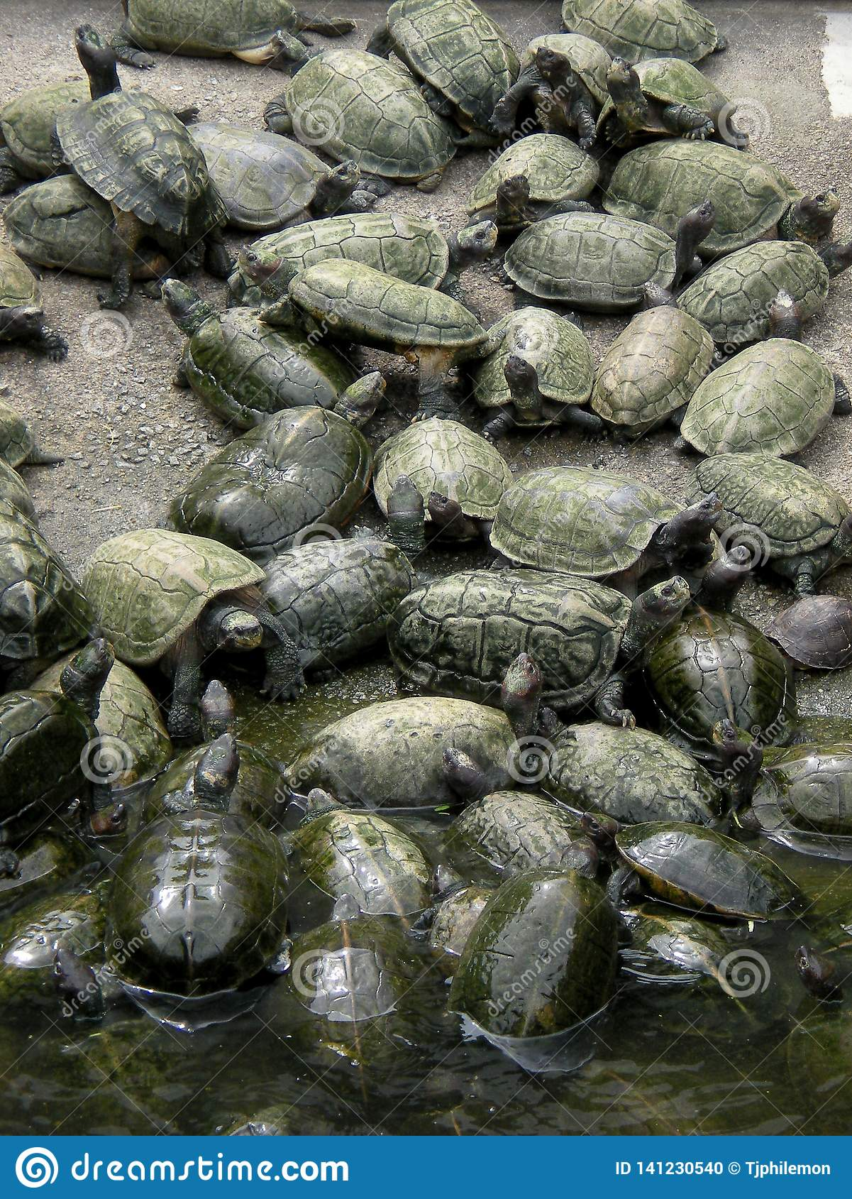 Пруд черепахи