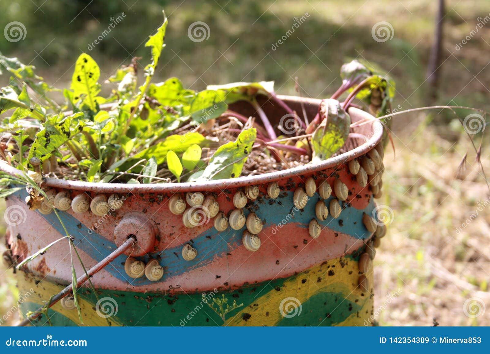 Покрашенные улитки сидя на старое ржавом и barral в саде бич