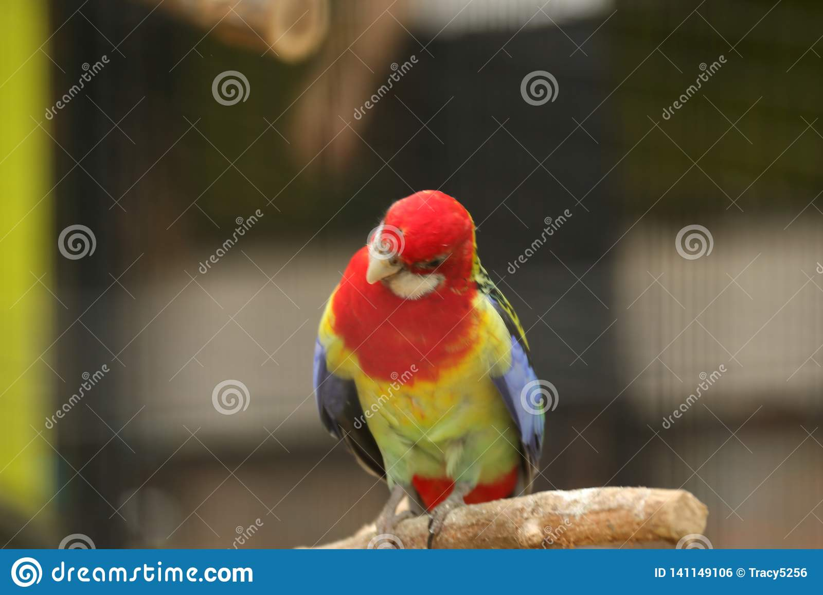 Попугай в парке живой природы Пекин