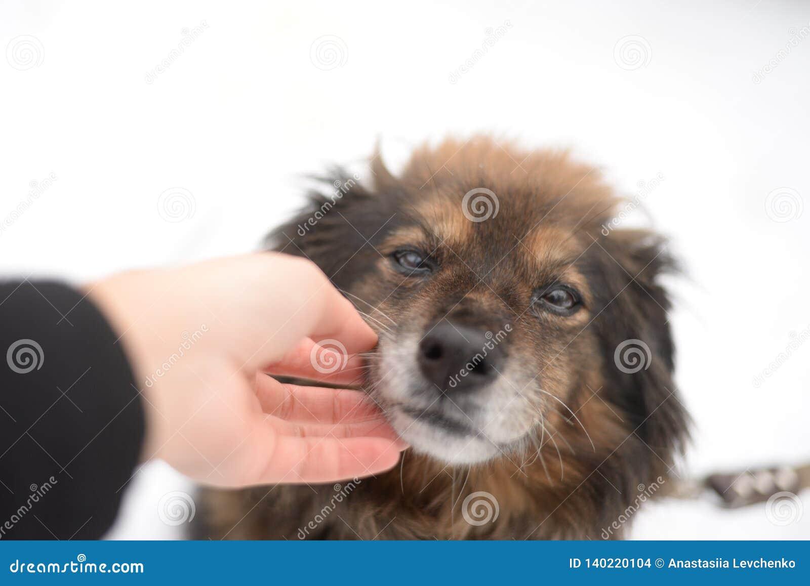Подрезанное изображение собаки girlwith outdoors Cynologist