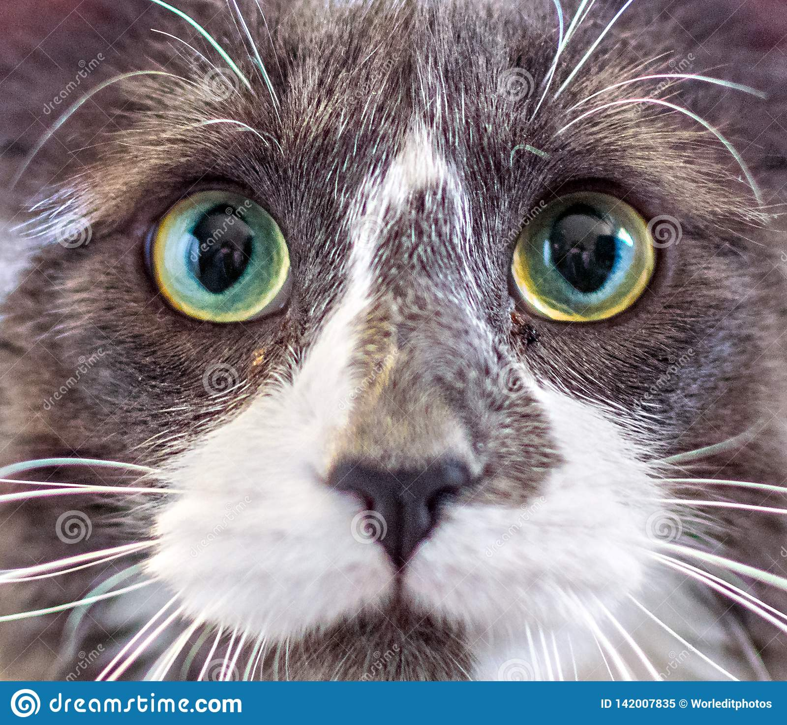 Портрет конца-вверх котенка