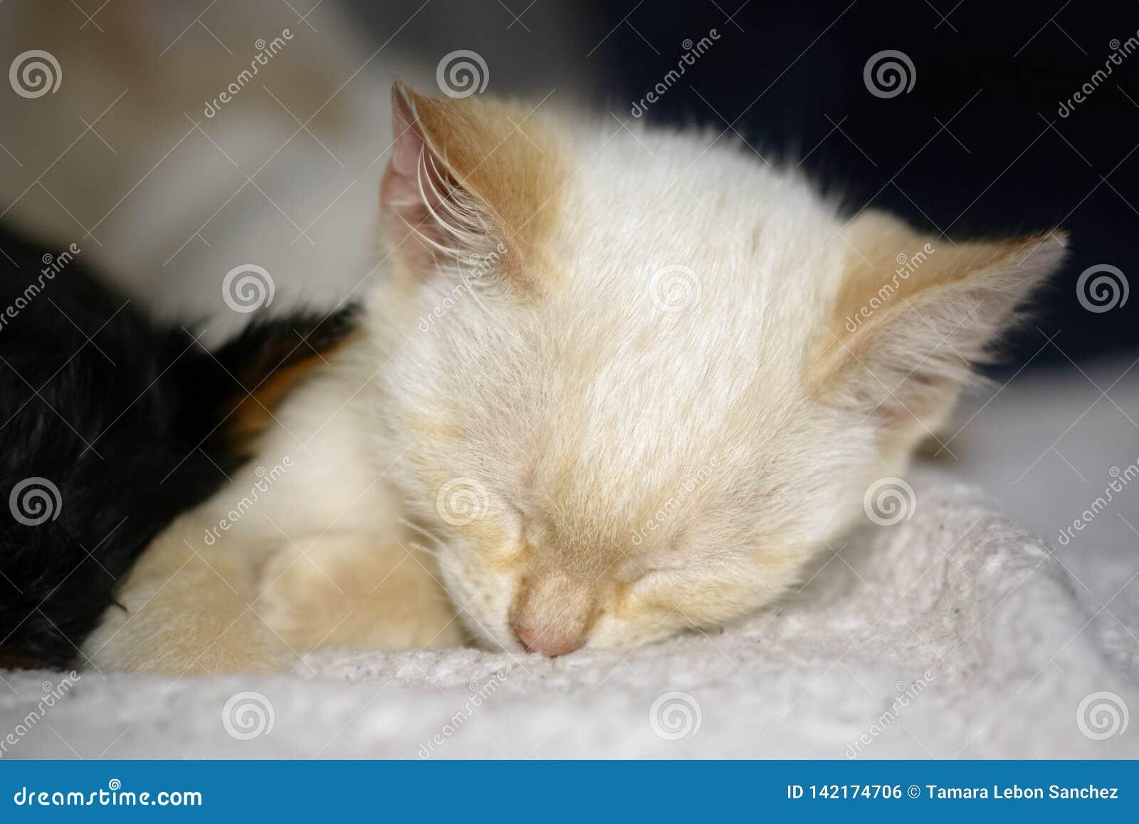 Портрет милого уснувшего котенка