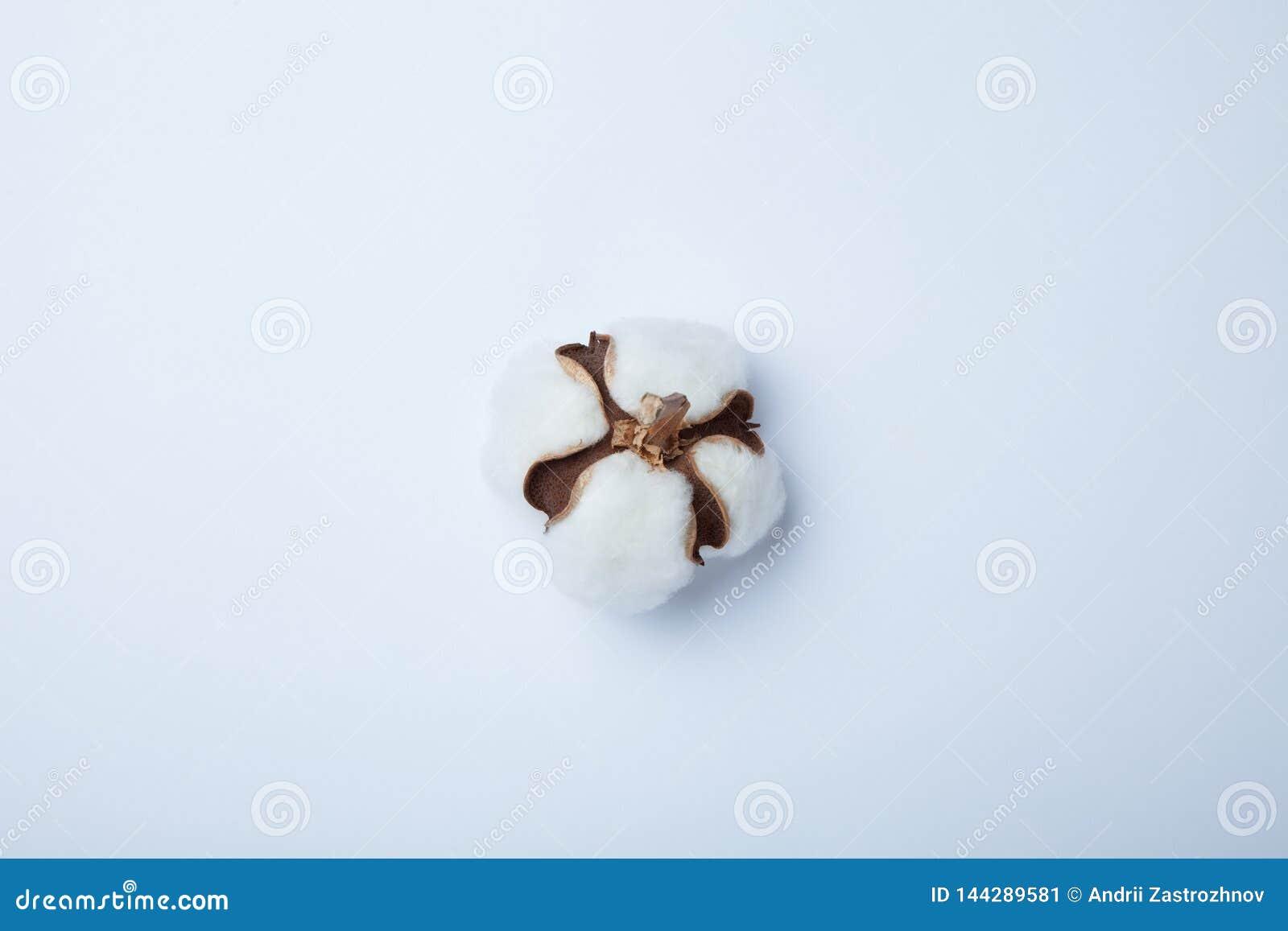 Ð ¡ otton kwiat na białym tle Mieszkanie nieatutowy, odgórny widok