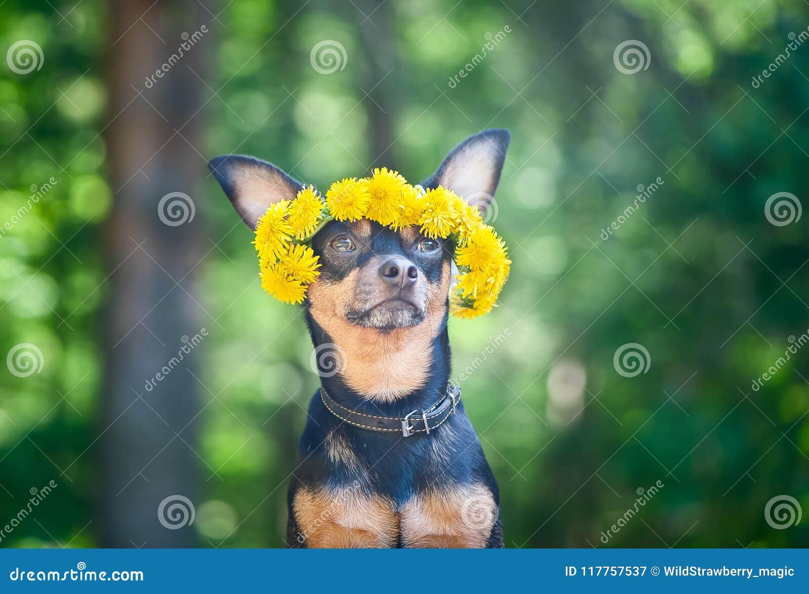 Ð-¡ Utewelpe, ein Hund in einem Kranz des Frühlinges blüht auf einem natürlichen Ba