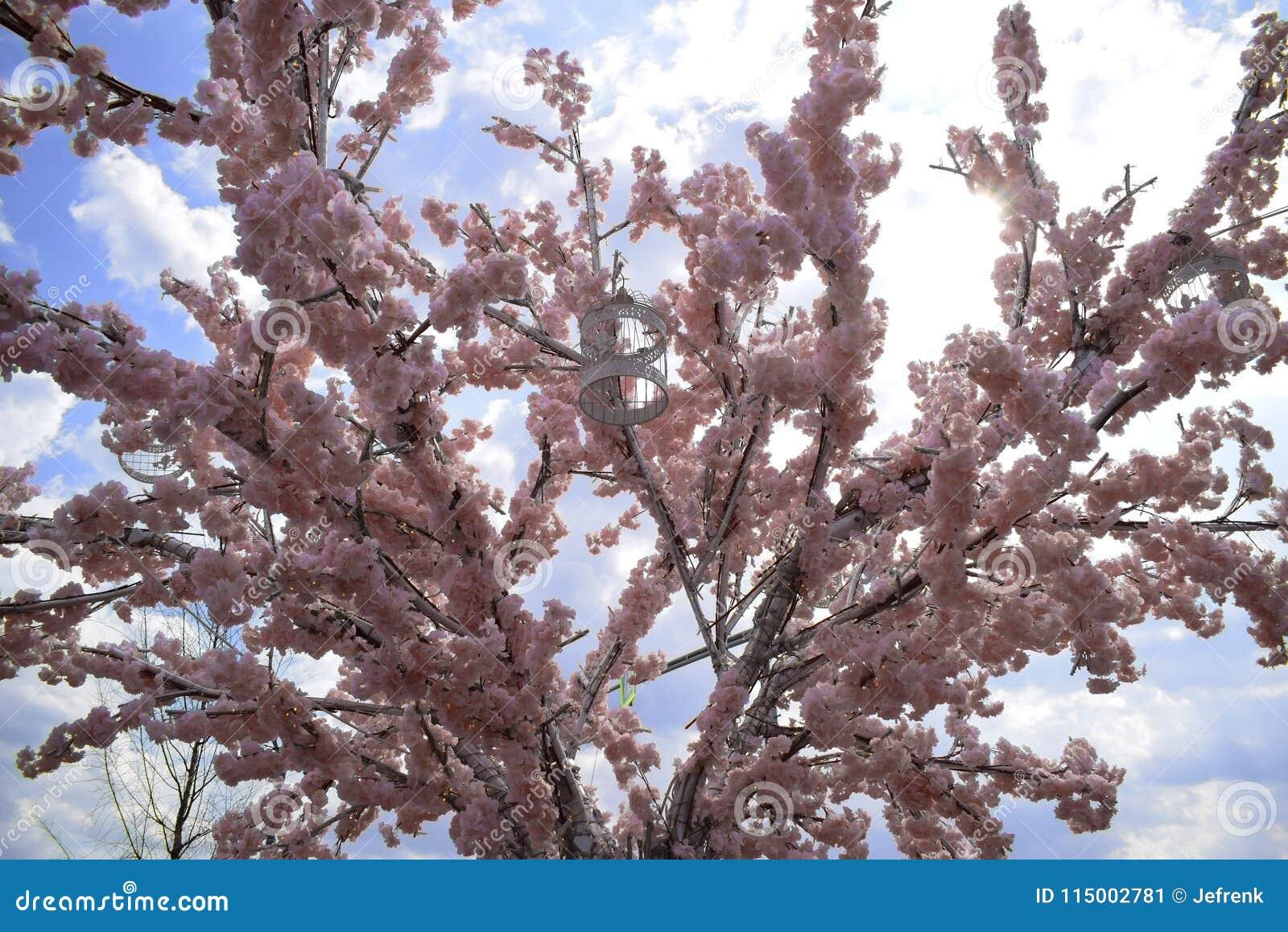 Ð ¡ wiek dla ptaka Menchie Sakura drzewo fartuch