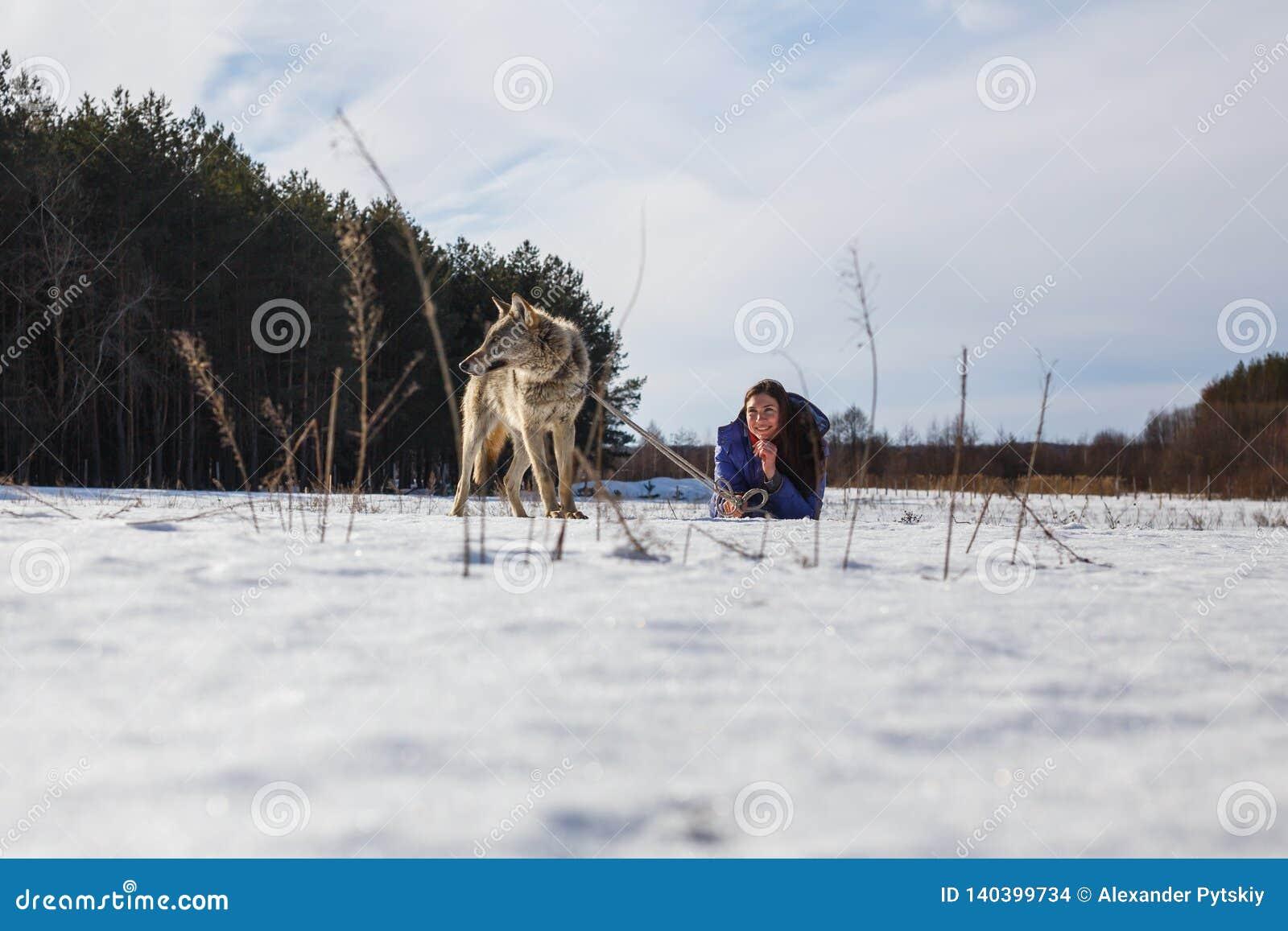Девушка, волк и 2 собачьих борзой играя в поле в зиме в снеге