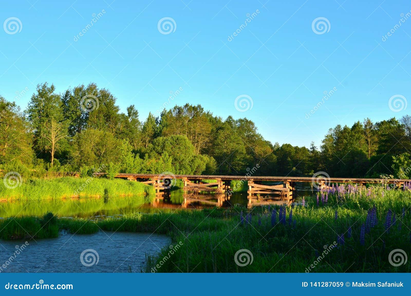 Деревянный мост журналов дерева лежит через небольшое реку внутри лесистой зоны среди зеленой природы