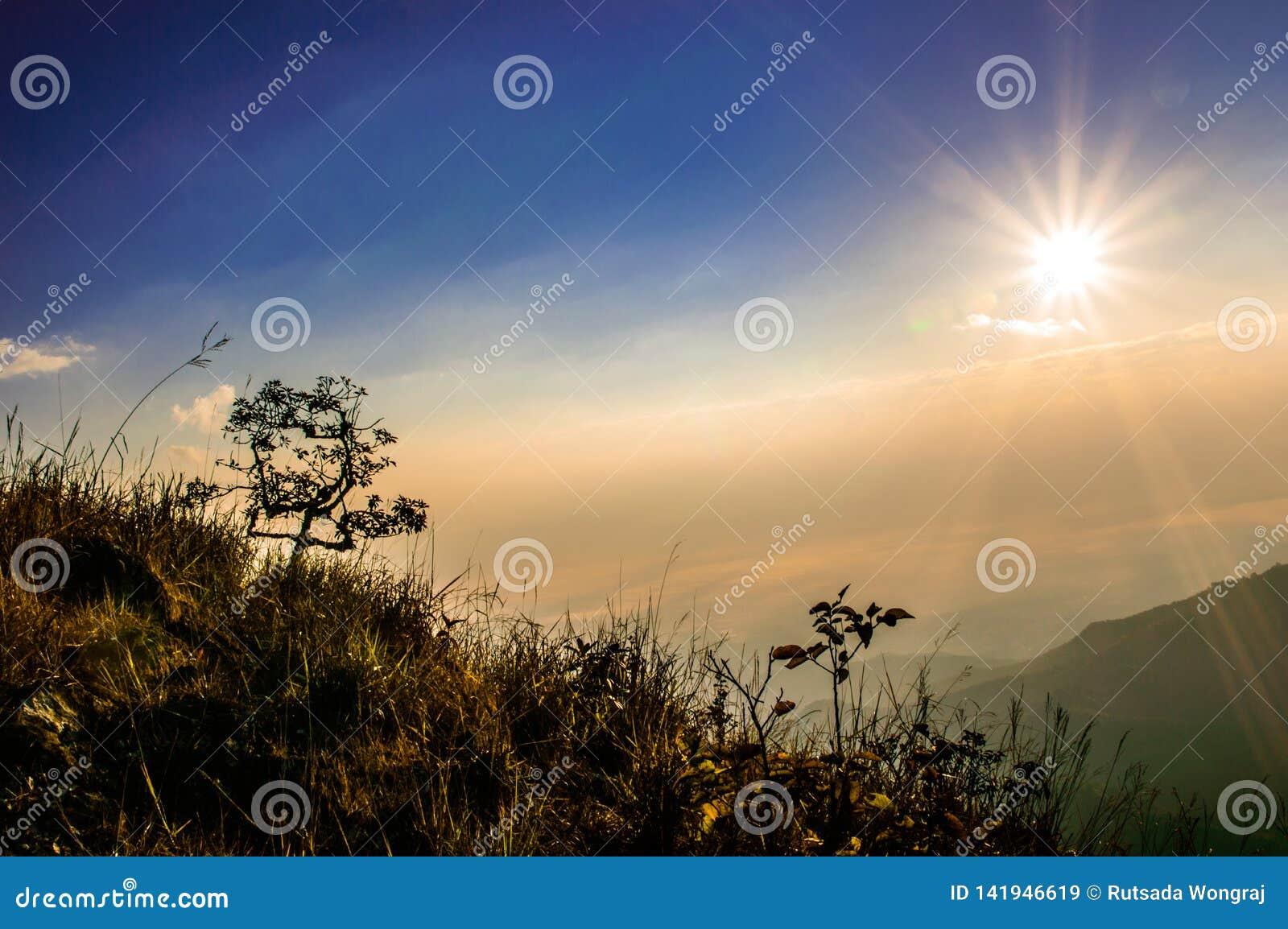 Дерево красивое на восходе солнца