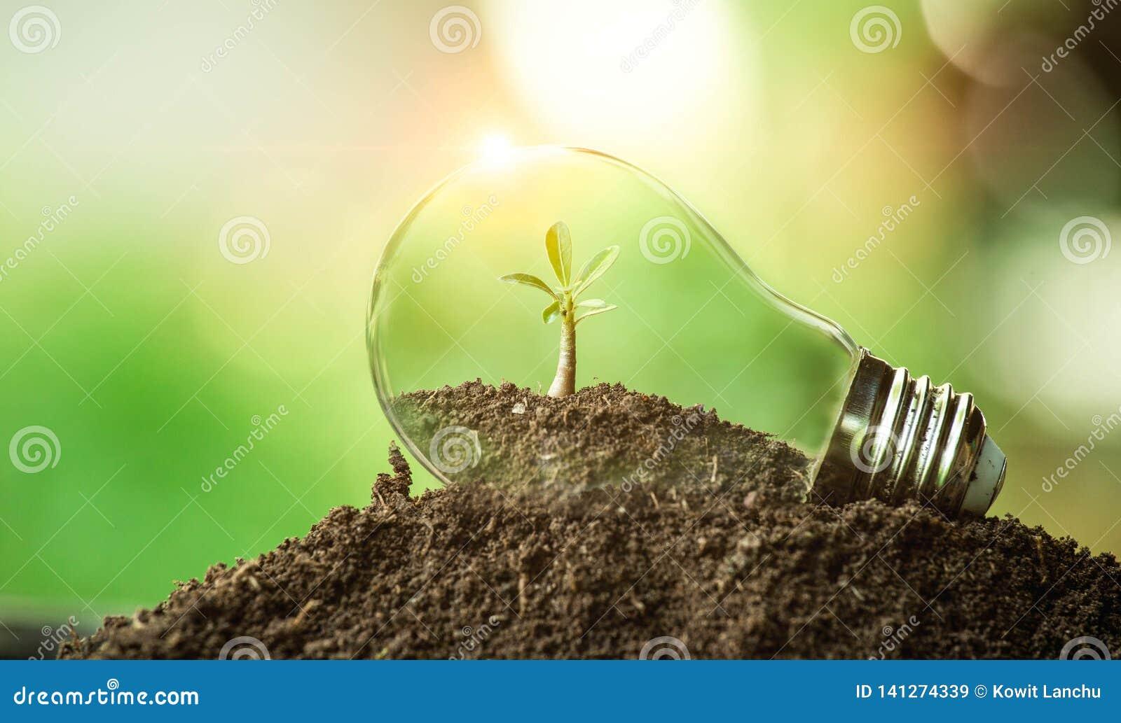 Дерево растя на почве в электрической лампочке Творческая идея дня земли или сохранить энергию и концепцию окружающей среды