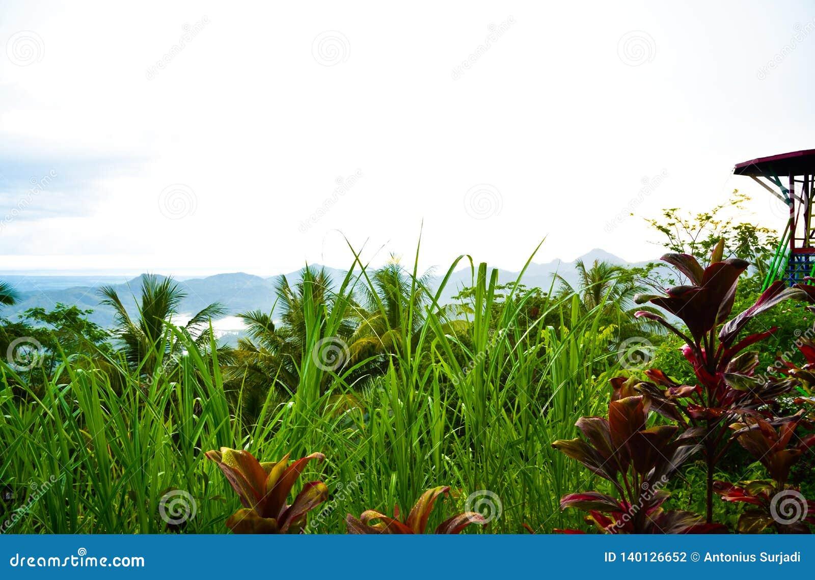 Джунгли сочного зеленого дождевого леса тропические со скача платформой в южном восходе солнца утра Eeast азиатском