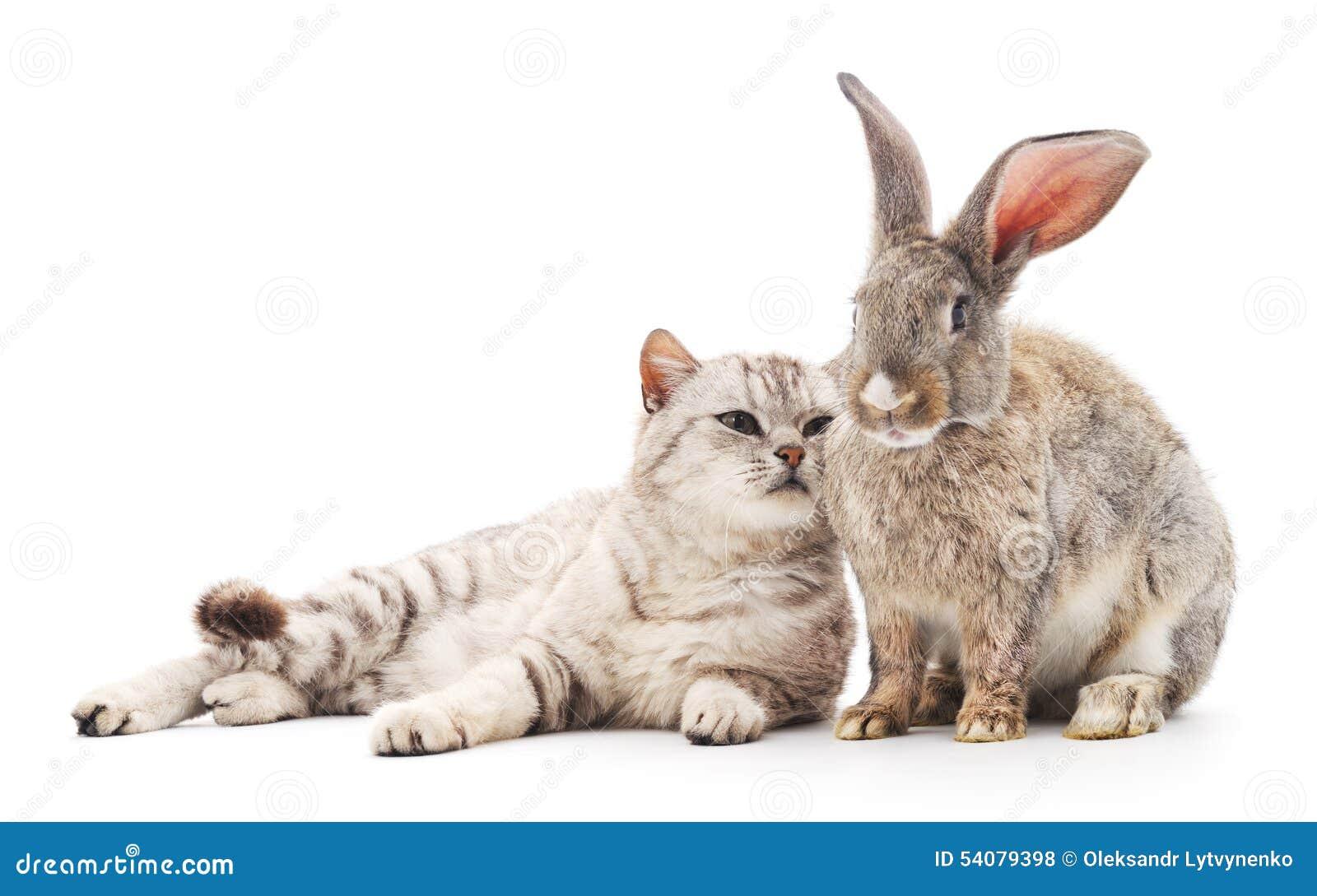 Ð ¡ bij en konijn