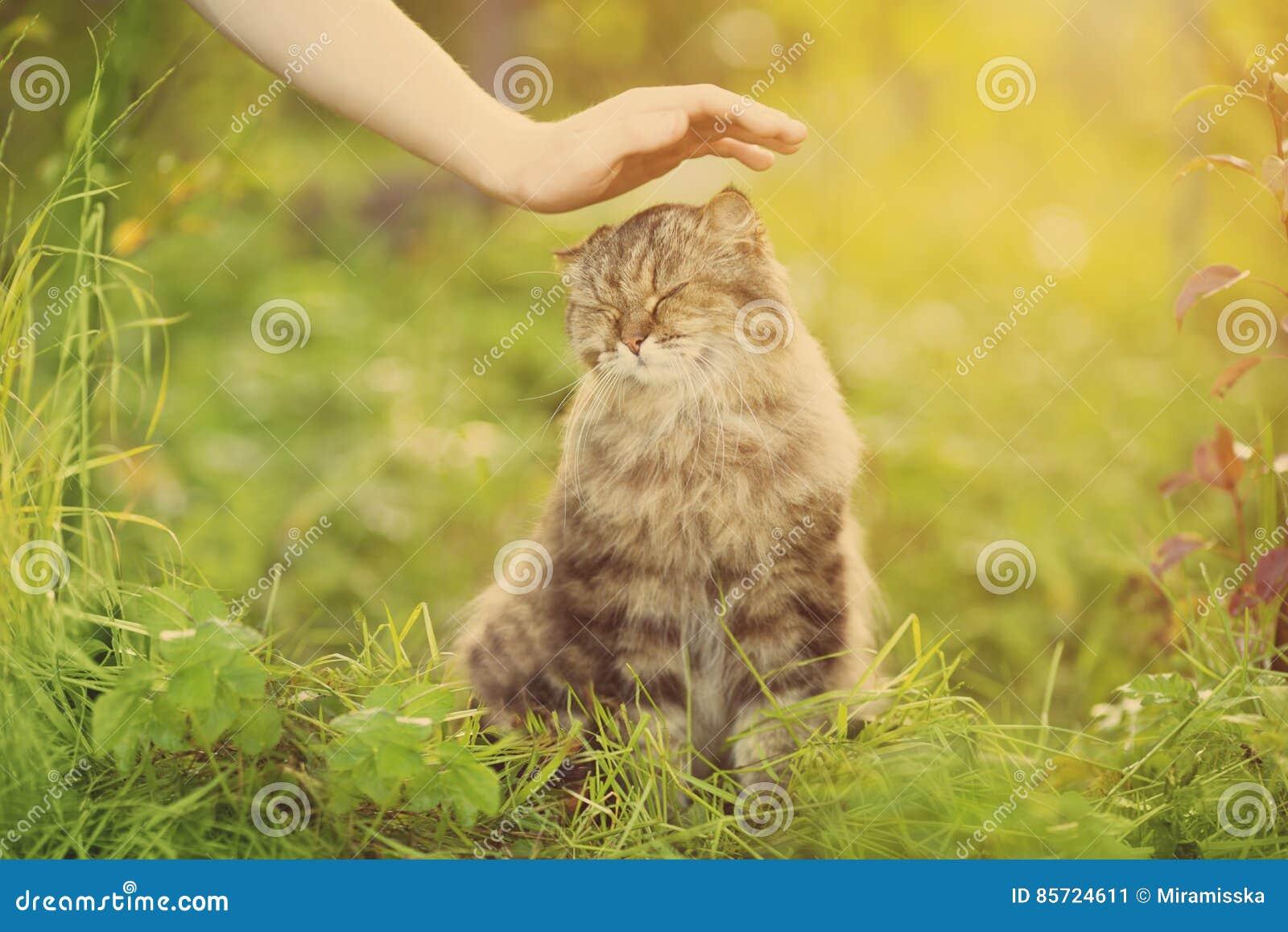 Ð ¡ przy i ręka na natury tle Alergie zwierzęta, kota fu