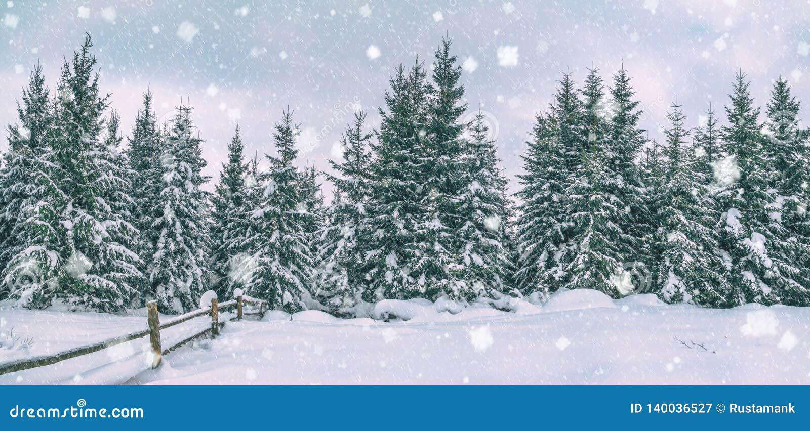 Сельский ландшафт зимы, панорама, знамя - взгляд снежного соснового леса