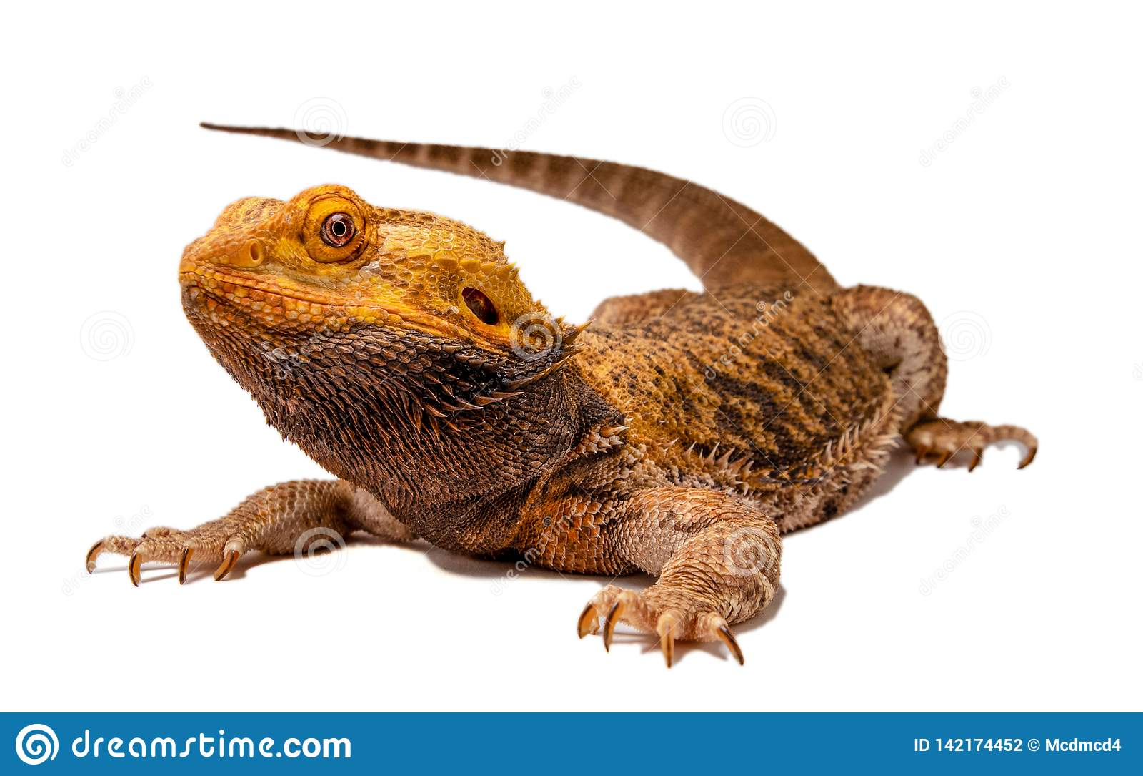 Сердитый бородатый силуэт дракона