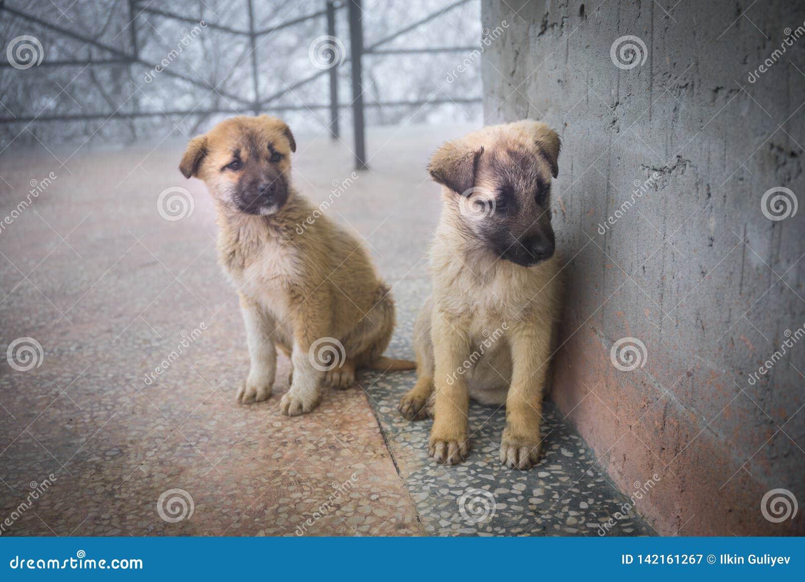 2 смешанных щенят породы сидя в виде спереди 2 маленьких собаки сидя на поле балкона