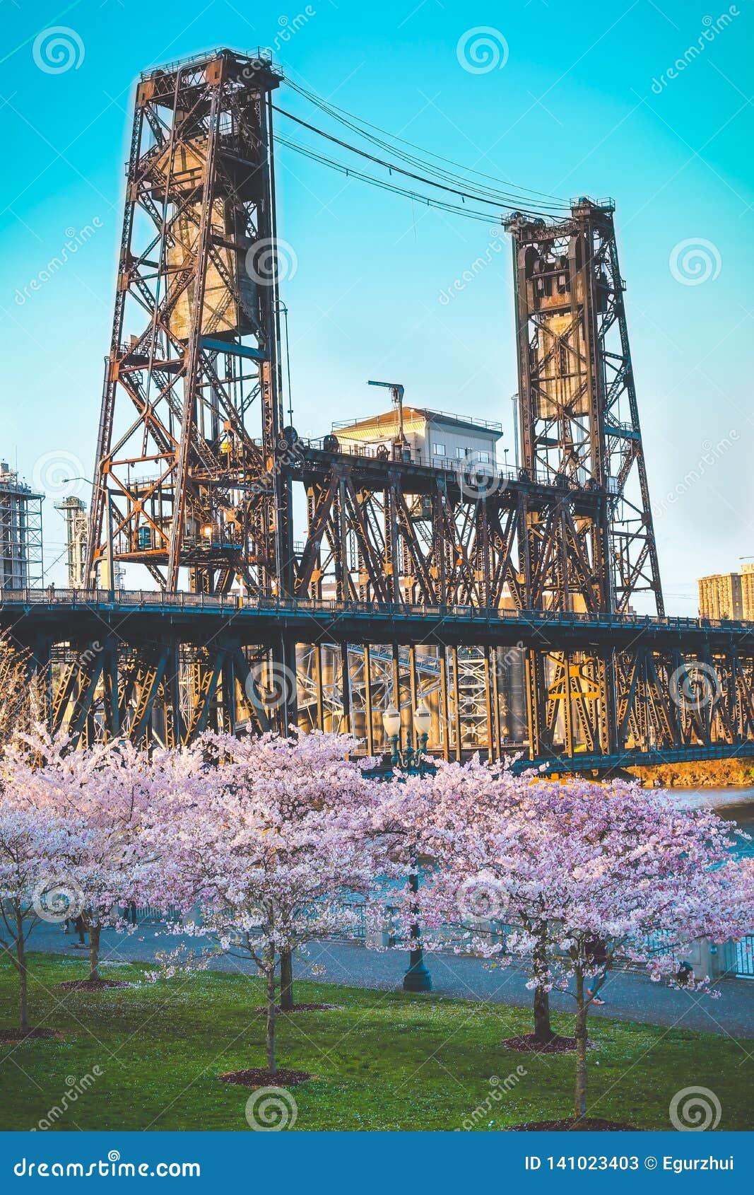 Стальной мост Портленд, ИЛИ деревья вишневого цвета