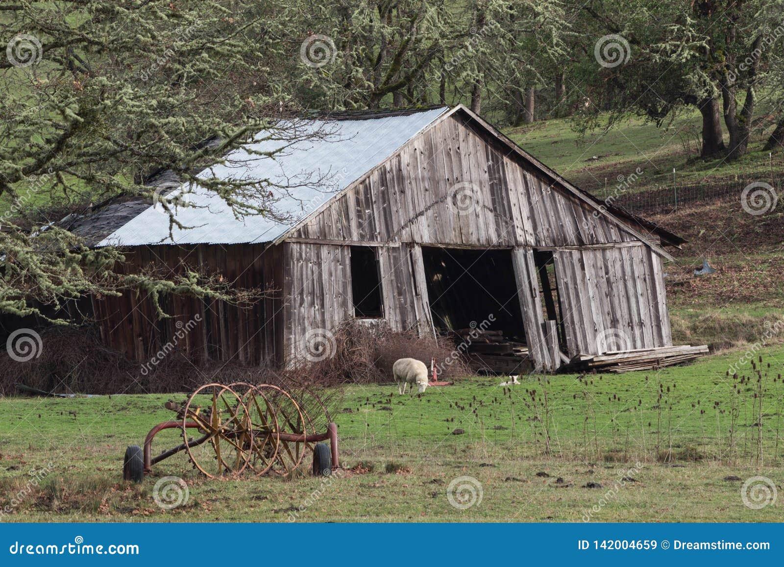 Старые Swayback амбар и овцы