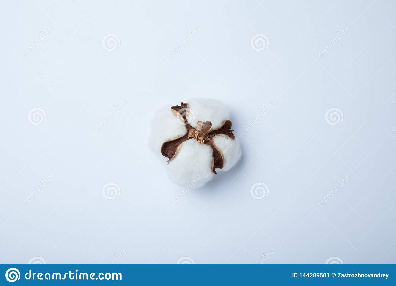 Сotton flower on white background. Flat lay, top view