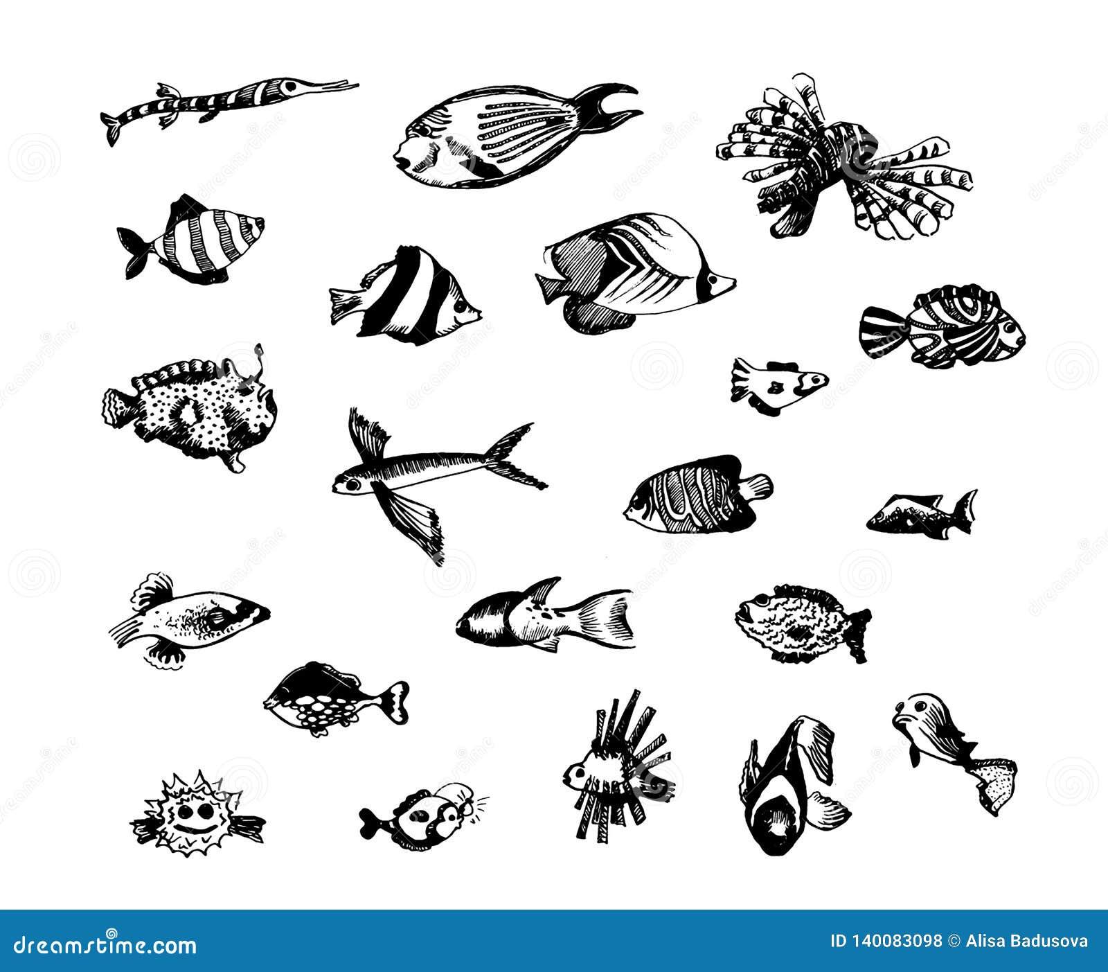 Эскиз руки вектора вычерченный иллюстрации рыб на белой предпосылке