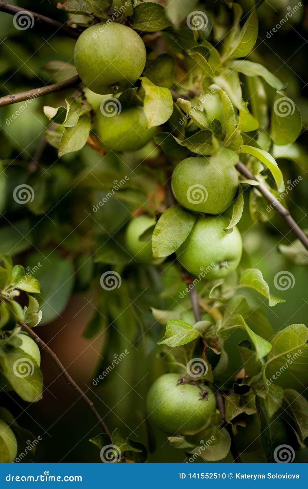 яблоко - зеленый вал