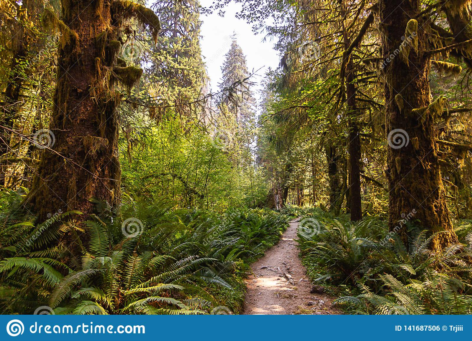 Яркий ый-зелен путь водя глубоко в лес лета