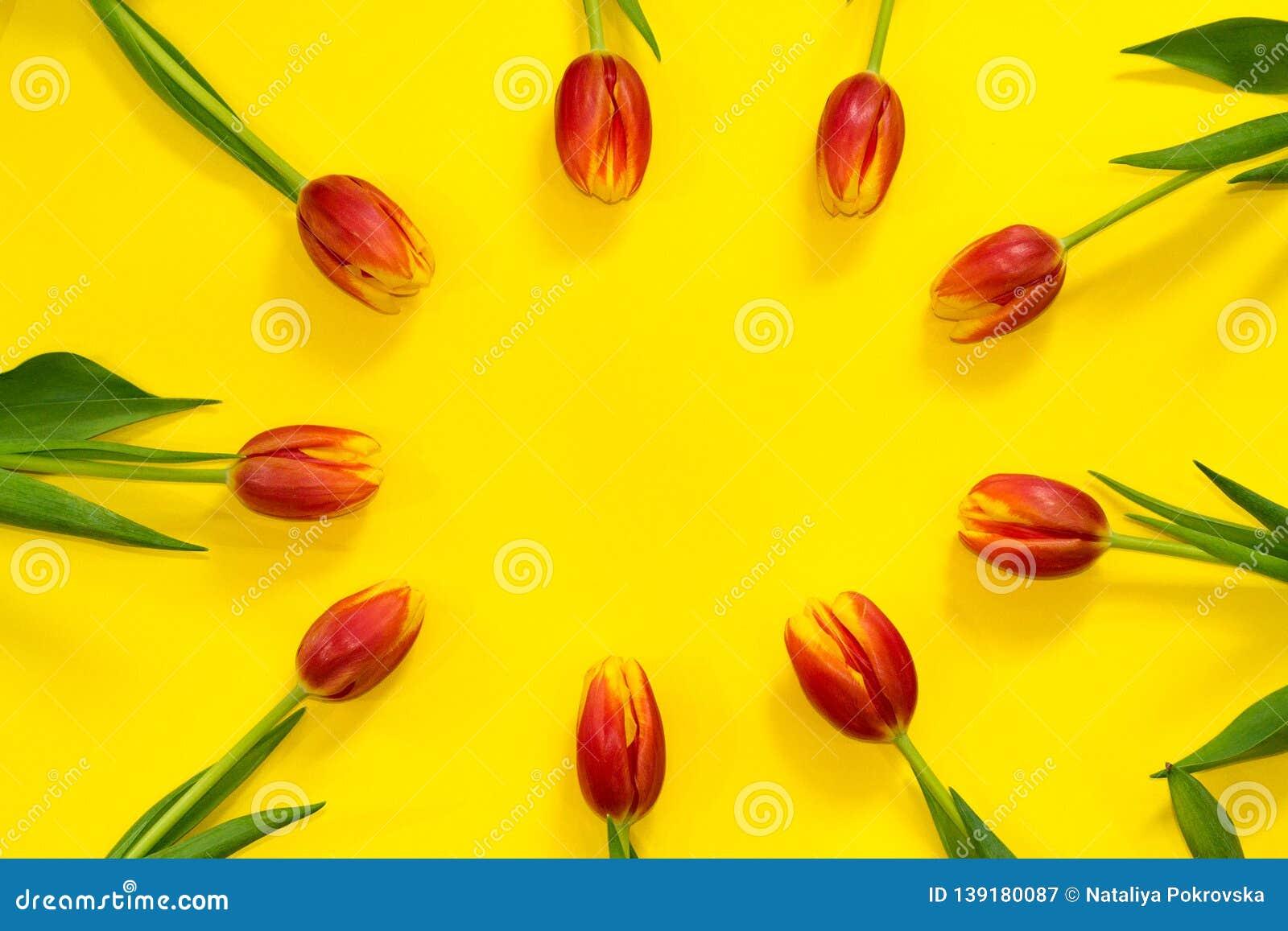 Флористическая красная рамка тюльпана на яркой желтой предпосылке с космосом экземпляра в центре Здравствуйте! весна концепция по