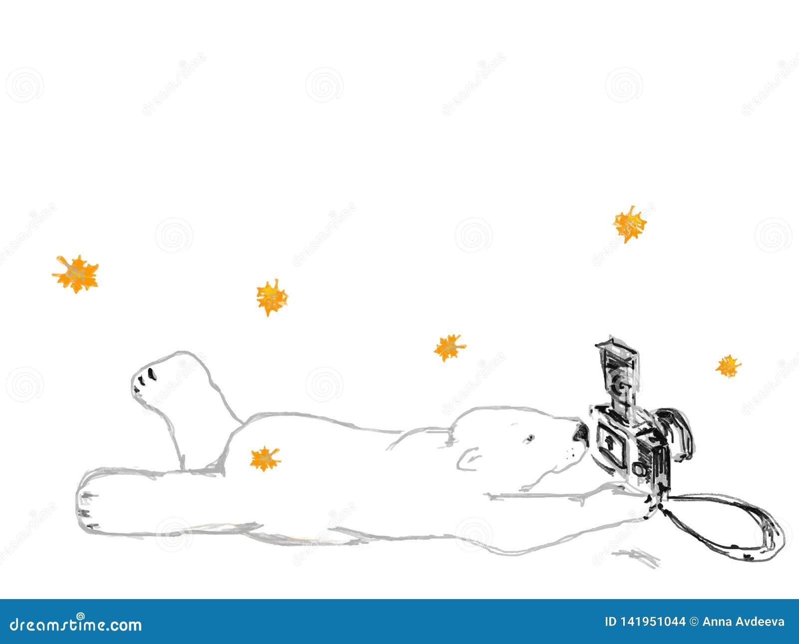 Фотограф полярного медведя лежит