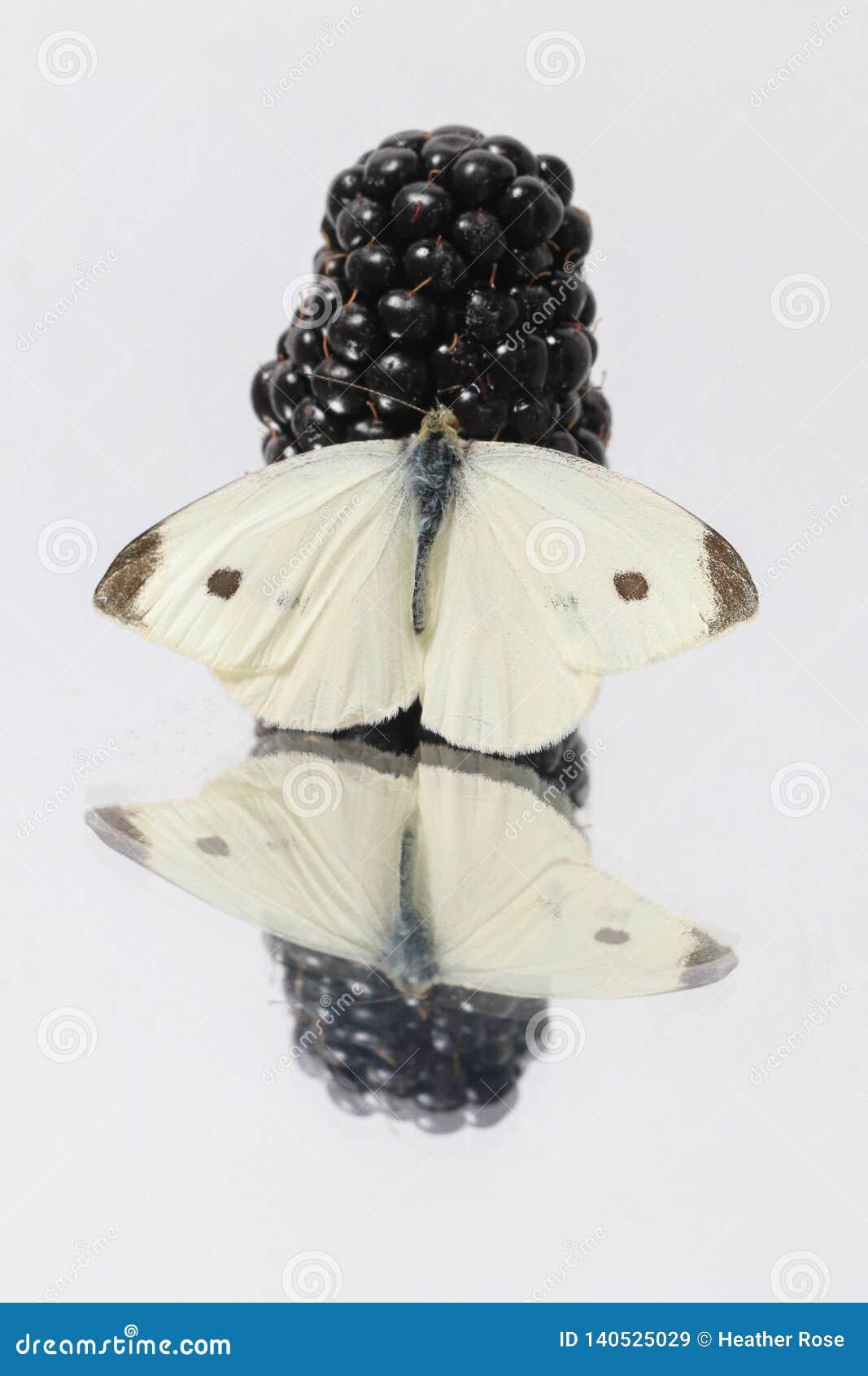 Фотоснимок макроса плода ежевики с белой бабочкой