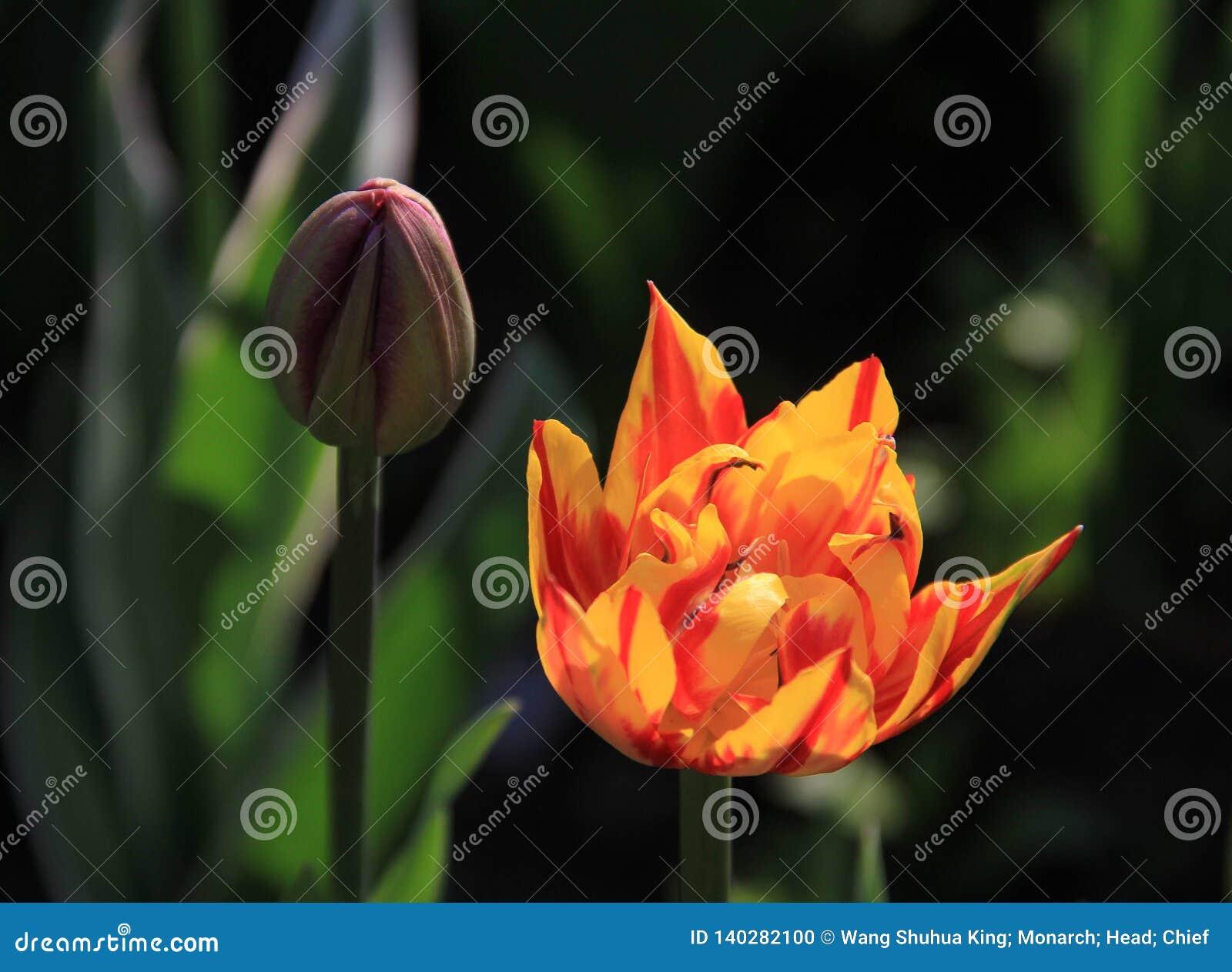 Цветок; цветорасположение