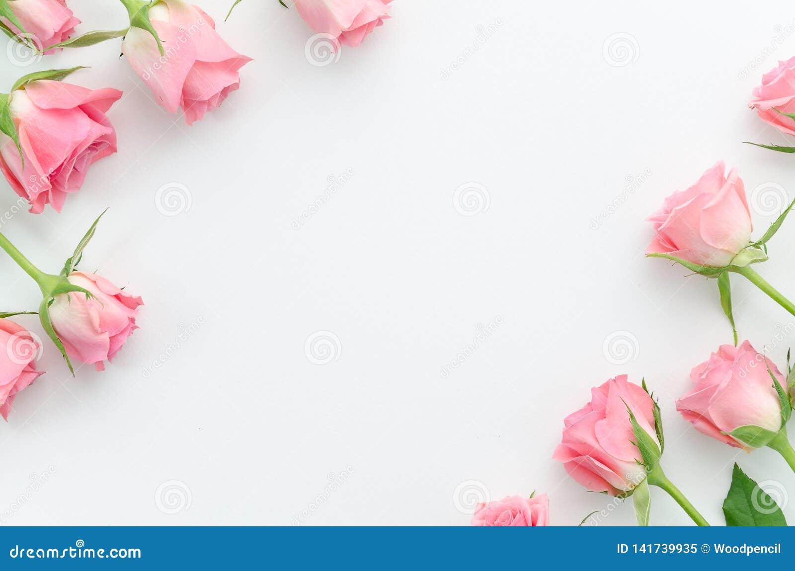 Цветочный узор, рамка сделанная красивых розовых роз на белой предпосылке Плоское положение, взгляд сверху Валентайн предпосылки