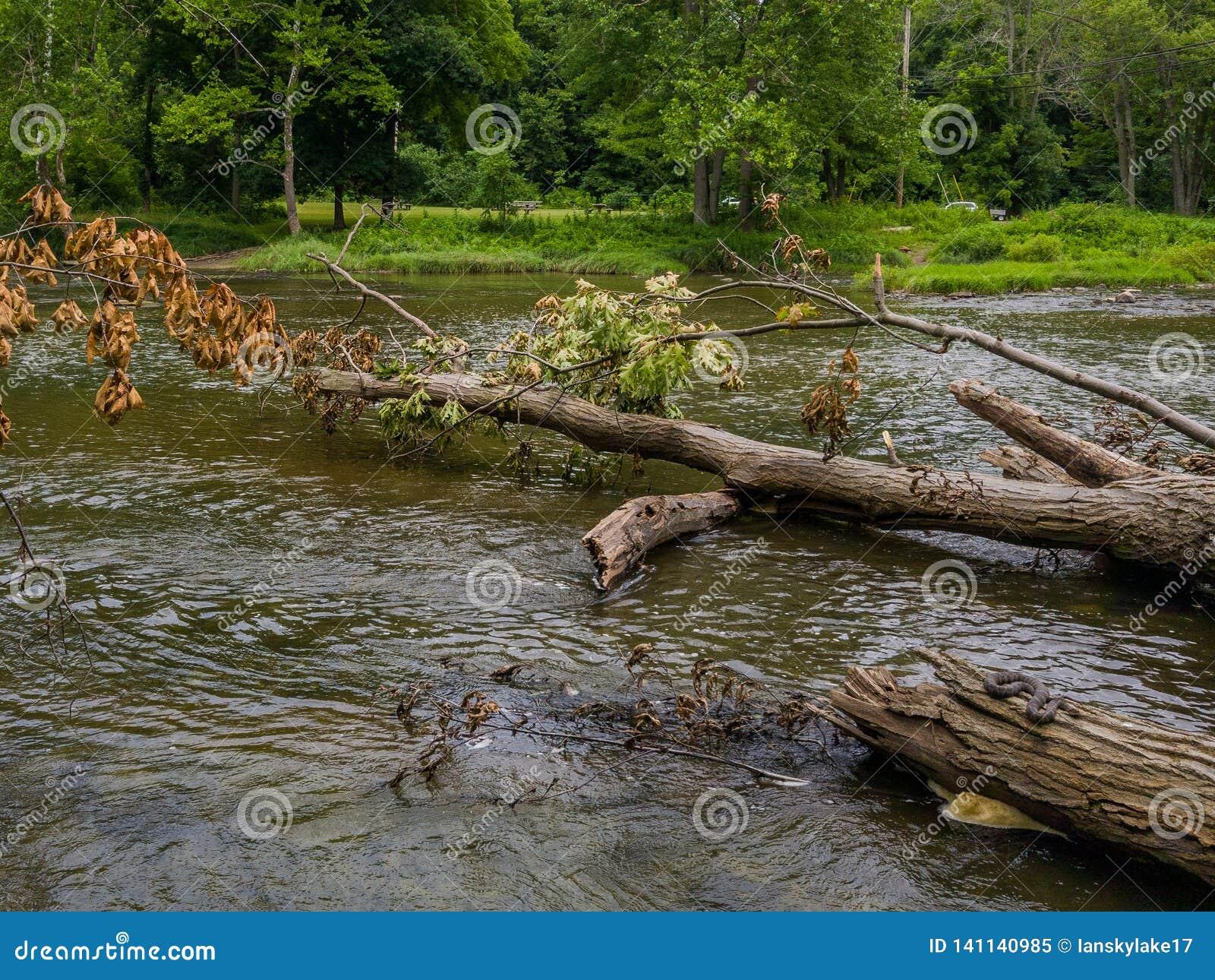 Река с упаденными деревьями и небольшой змейкой