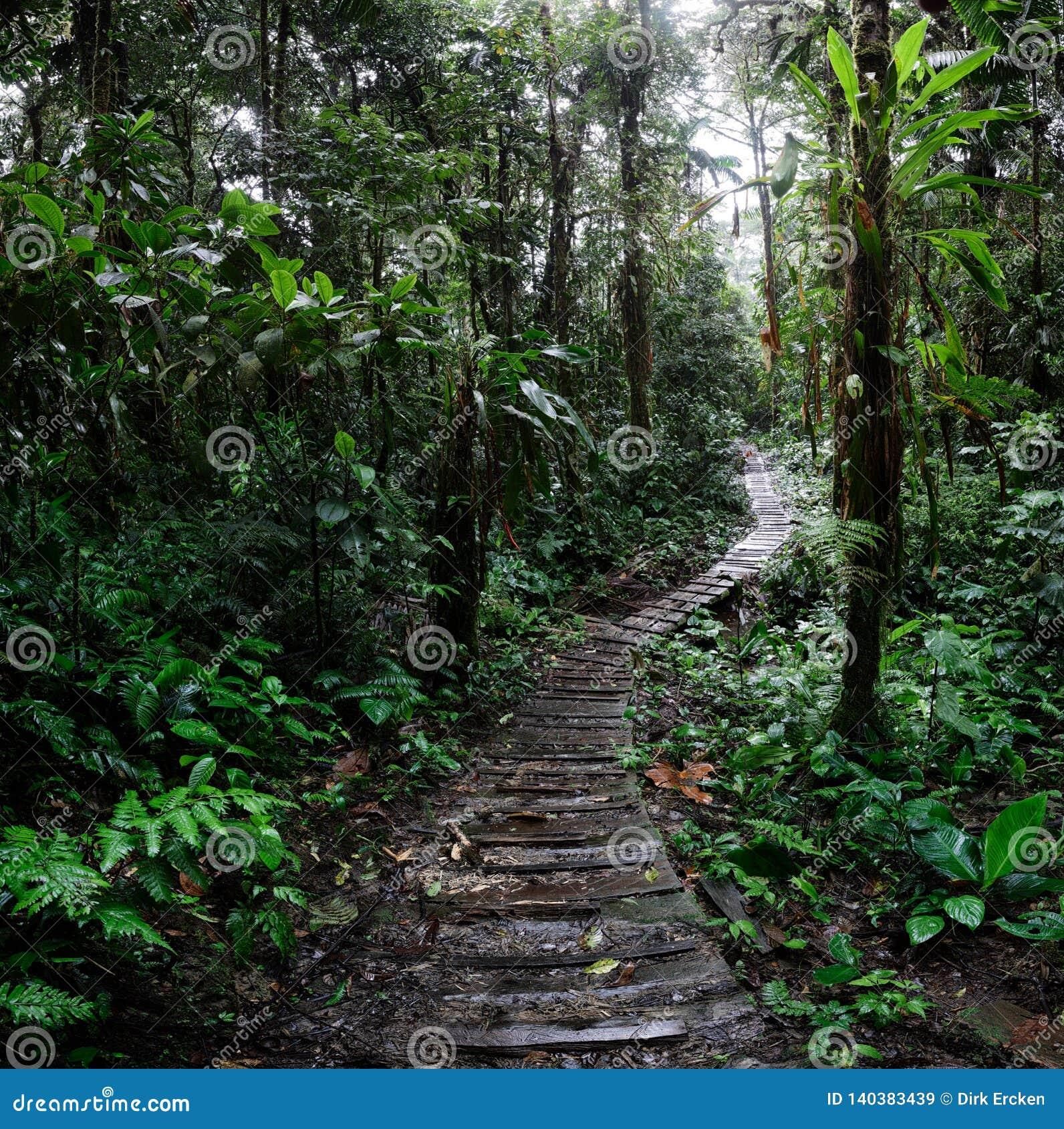 Ринв замотки следа джунглей дождевой лес Амазонки Колумбии