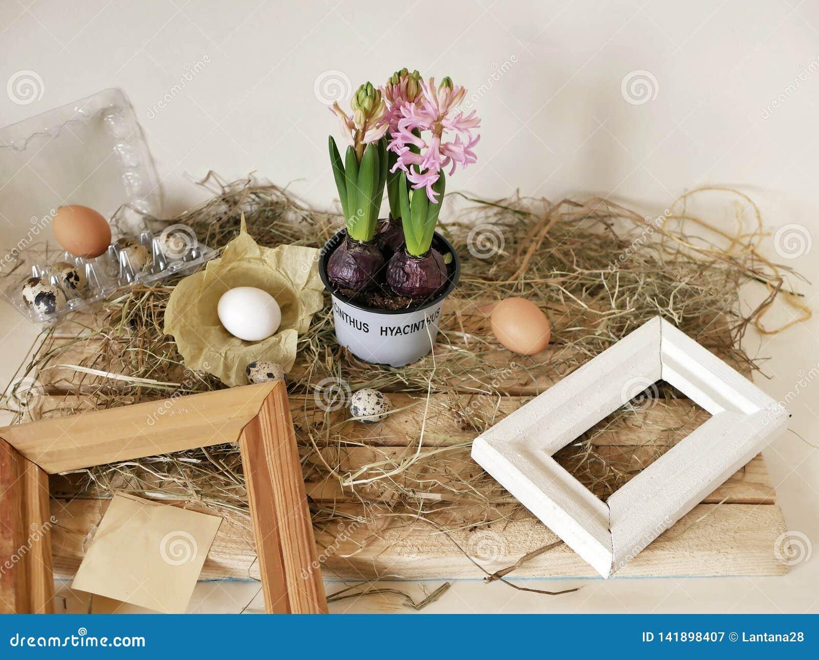 Розовые гиацинты в цветочном горшке, яйцах и яйцах триперсток, рамках, сене на светлом деревянном столе, весеннем сезоне, пасхе