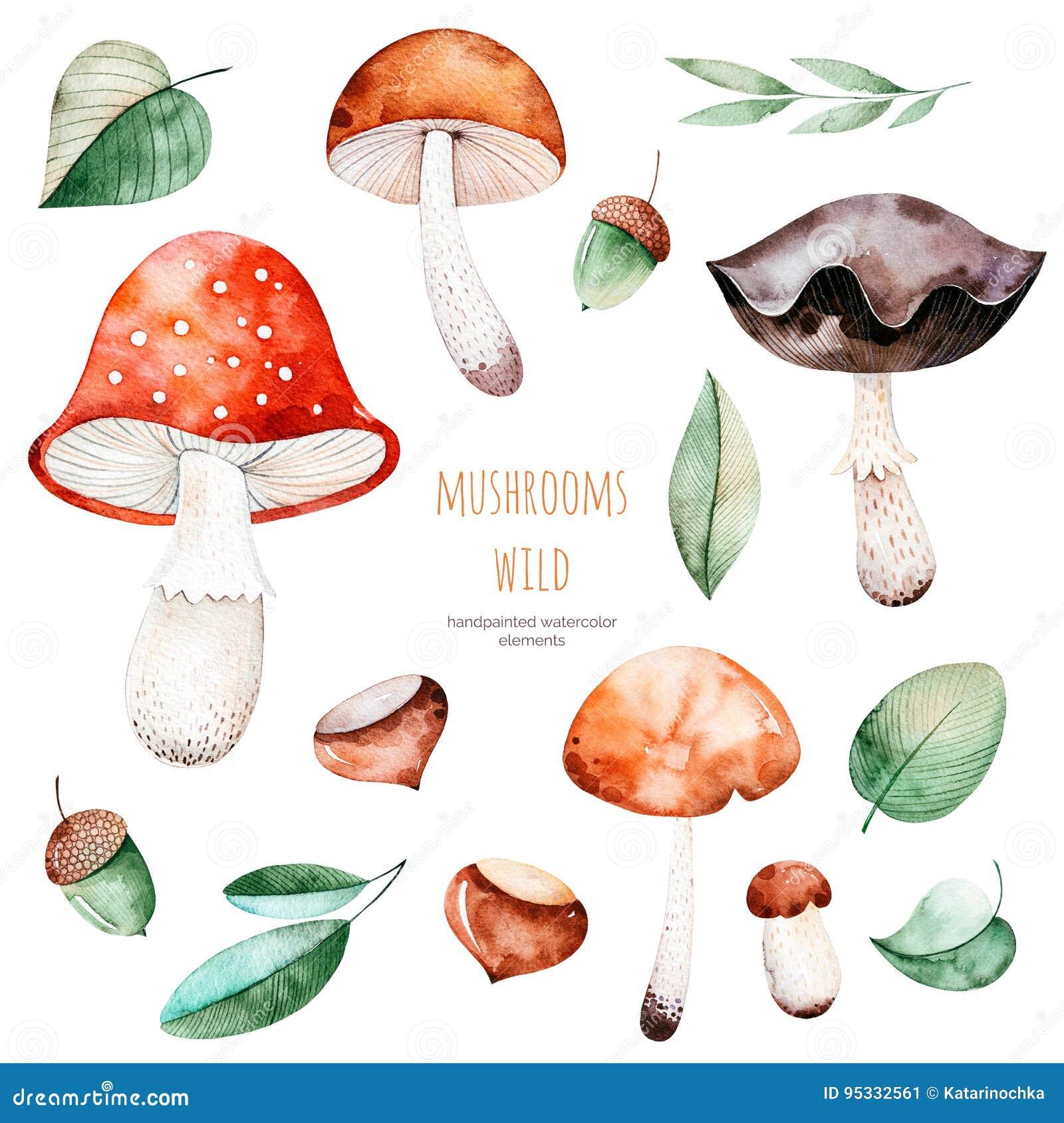 Ñ  jesieni olorful kolekcja z 15 akwarela elementami
