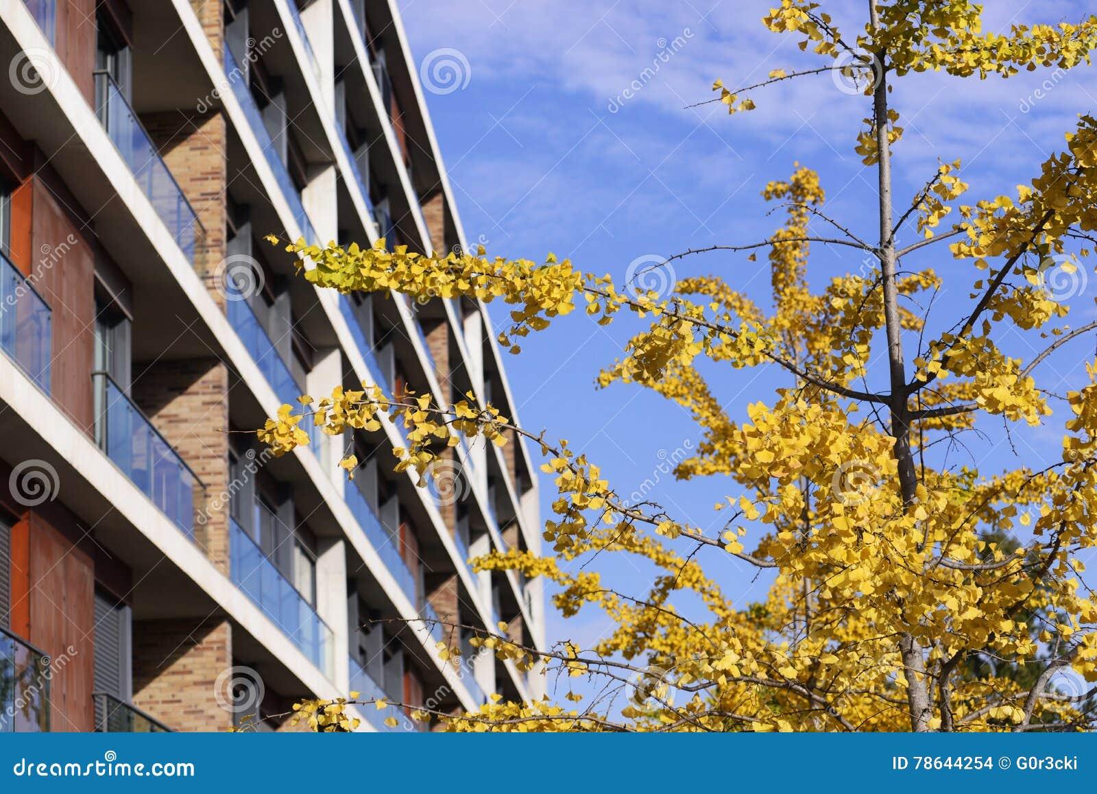 Żółci jesień liście, niebieskie niebo, Intymny mieszkanie własnościowe