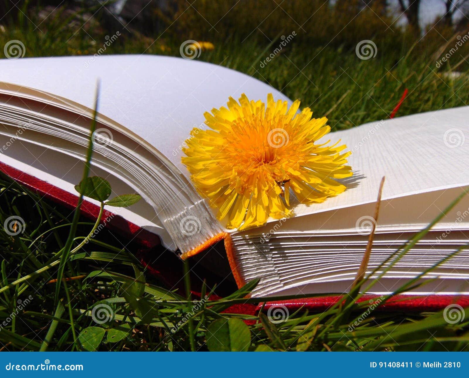 Żółty dandelion kłaść na hardback książce w ogródzie