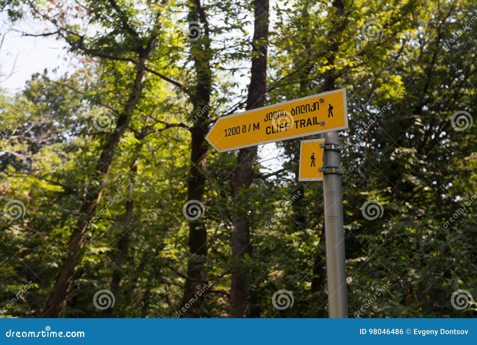 Żółty turystyczny pointer