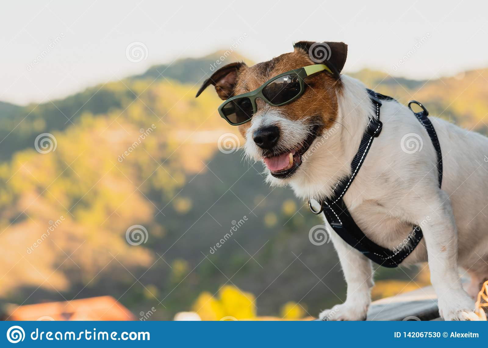 Óculos de sol vestindo do cão como o turista feliz que levanta no ponto de observação no auge da montanha