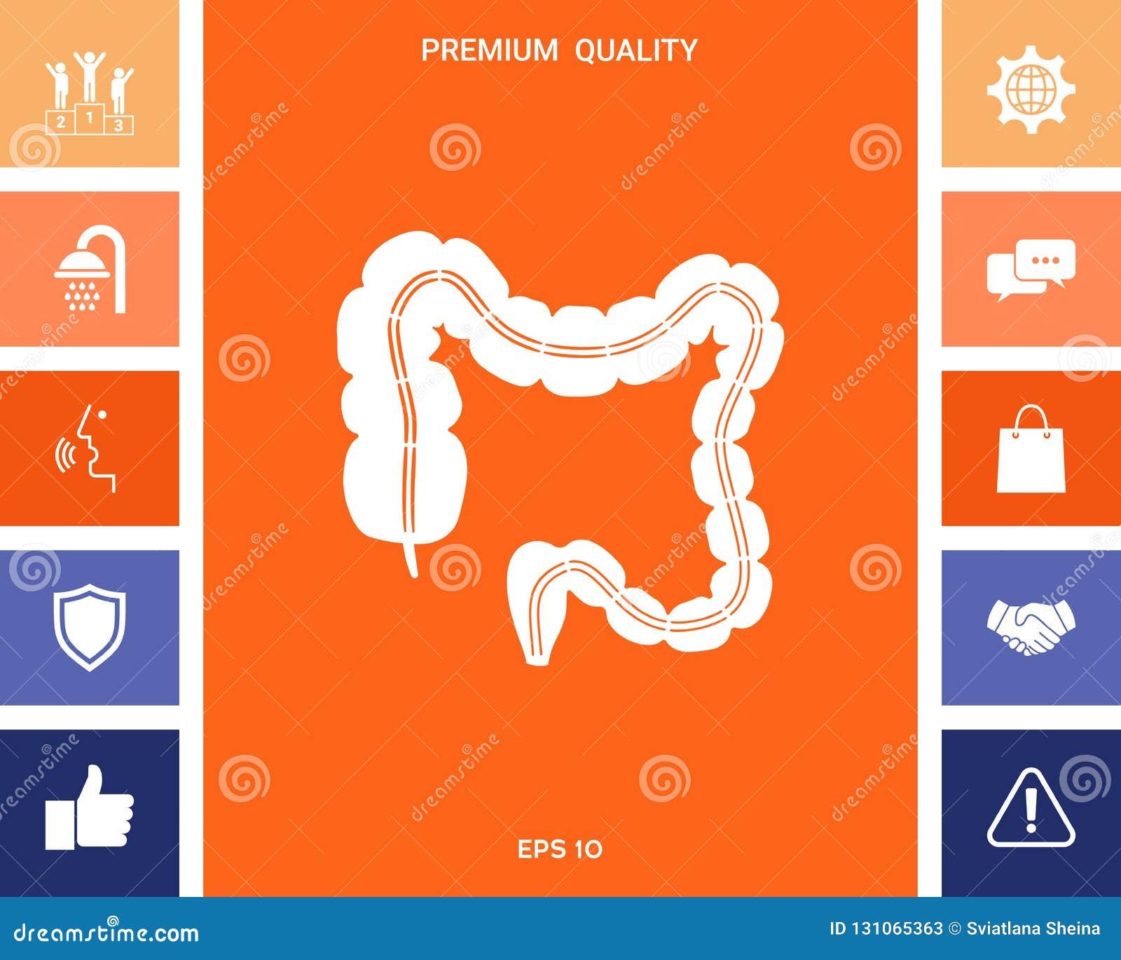 Órgano humano - el intestino grueso