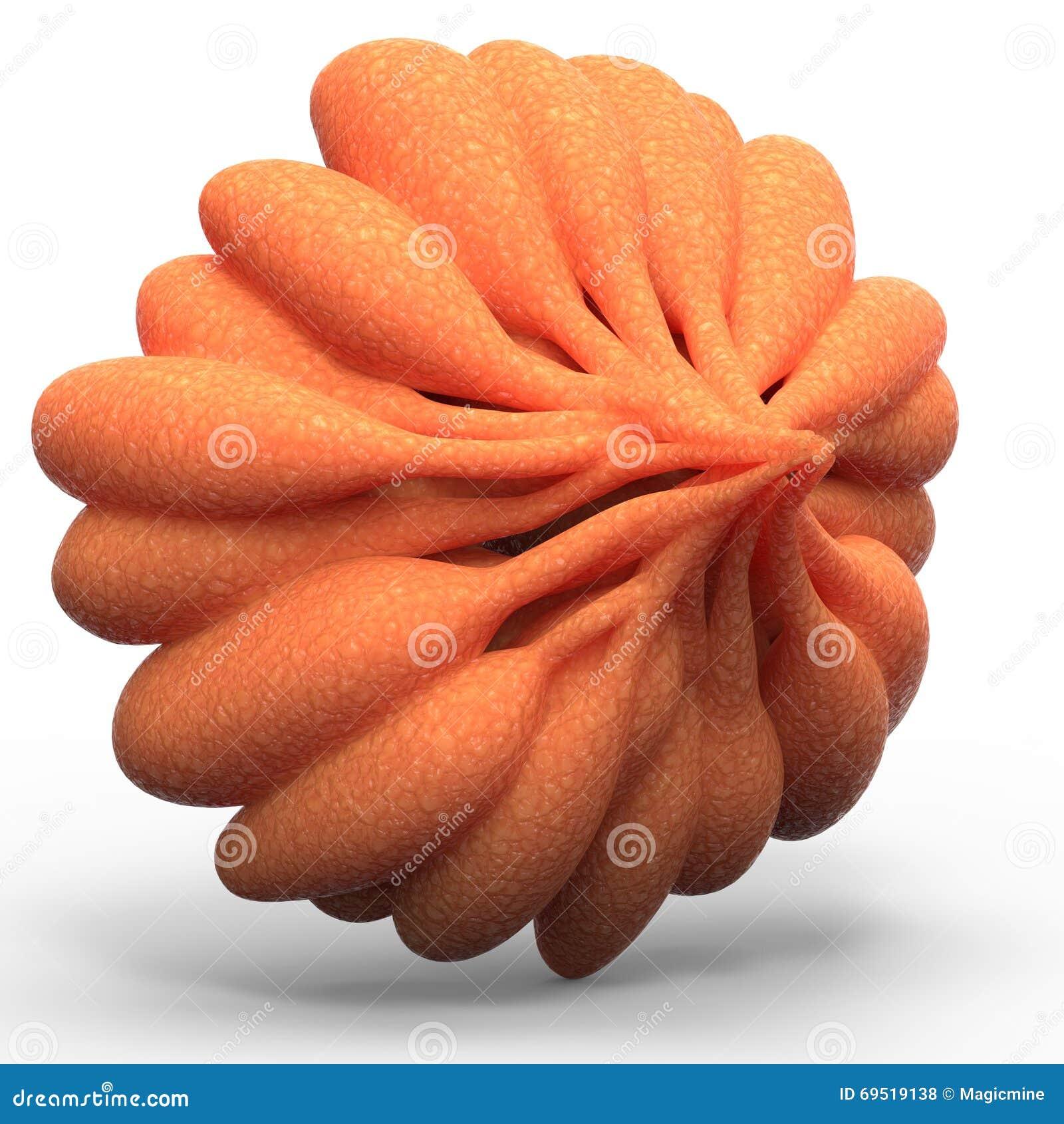 Órganos Humanos Del Cuerpo Femenino (glándulas Mamarias) Stock de ...