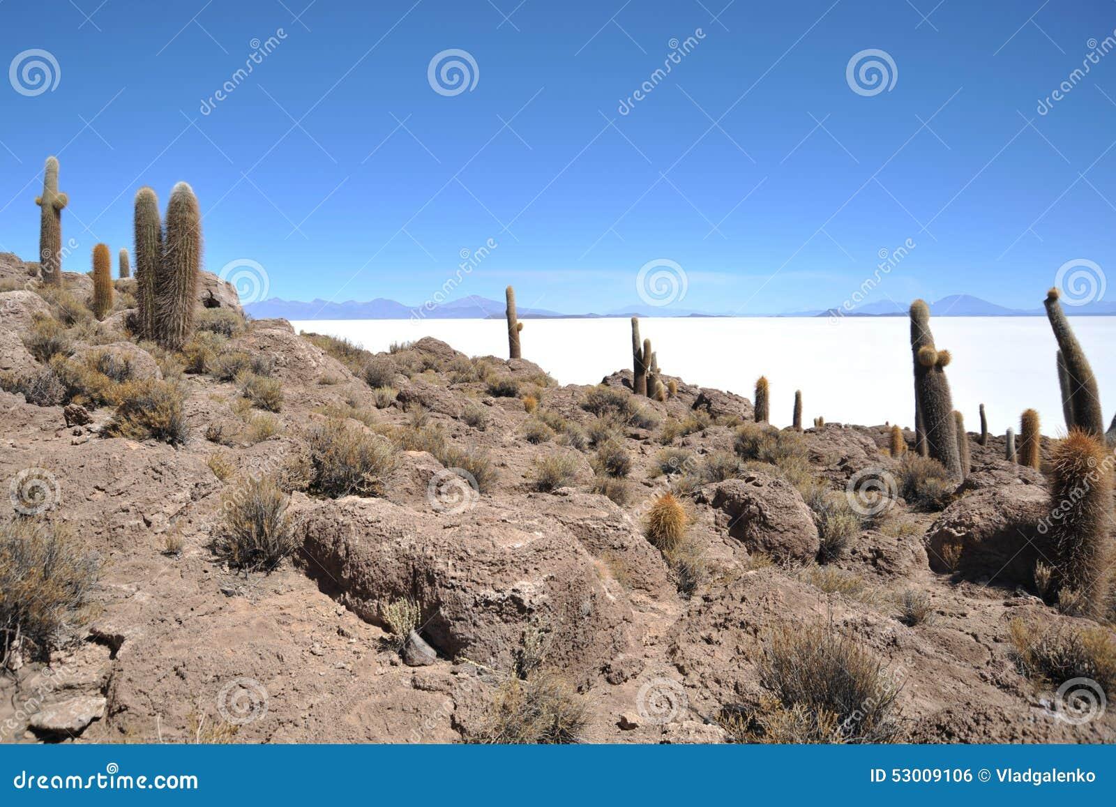 Ö Inca Wasi - kaktusö