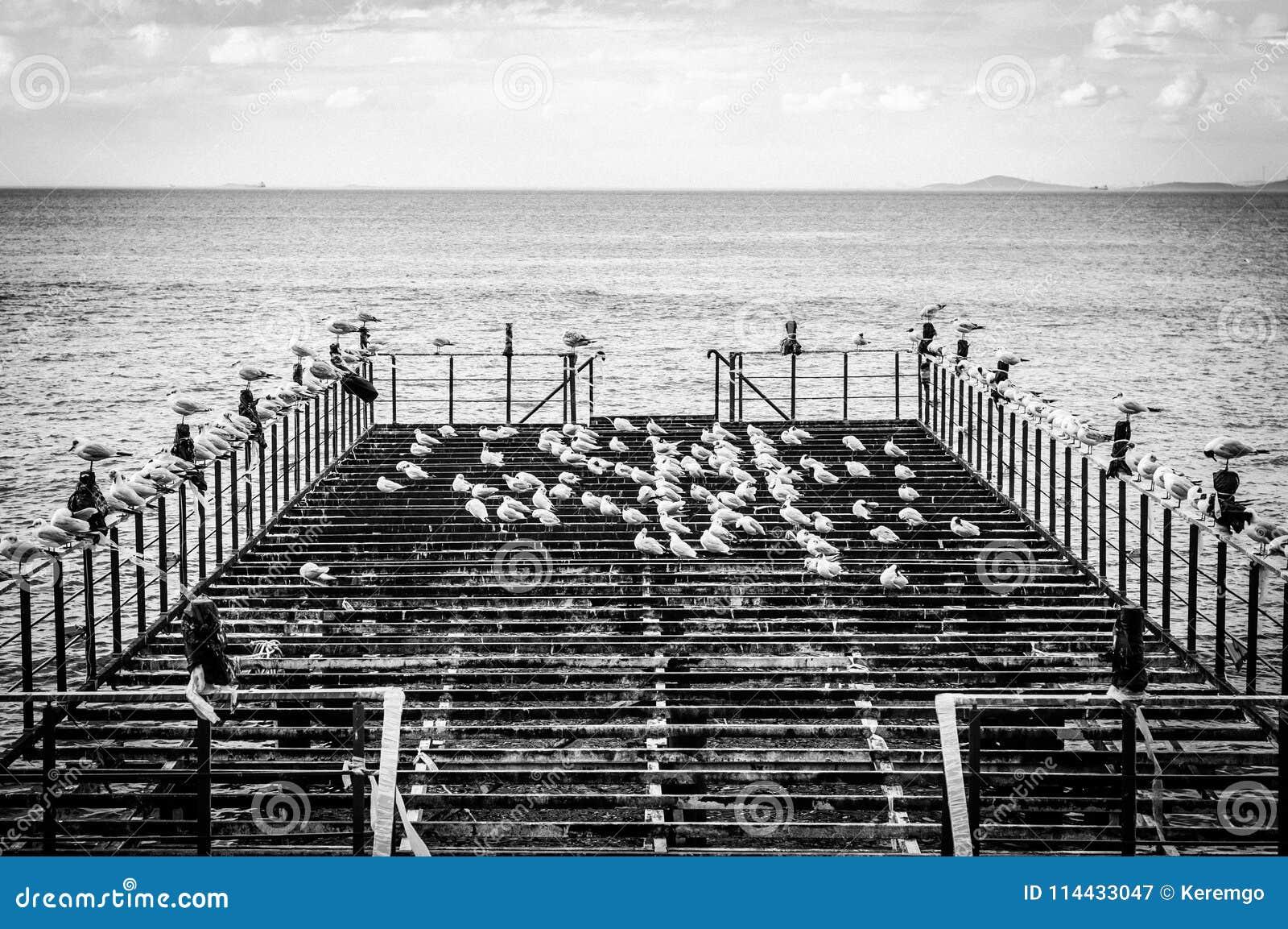 Ödelagd skeppsdocka med Seagulls och det lugna havet