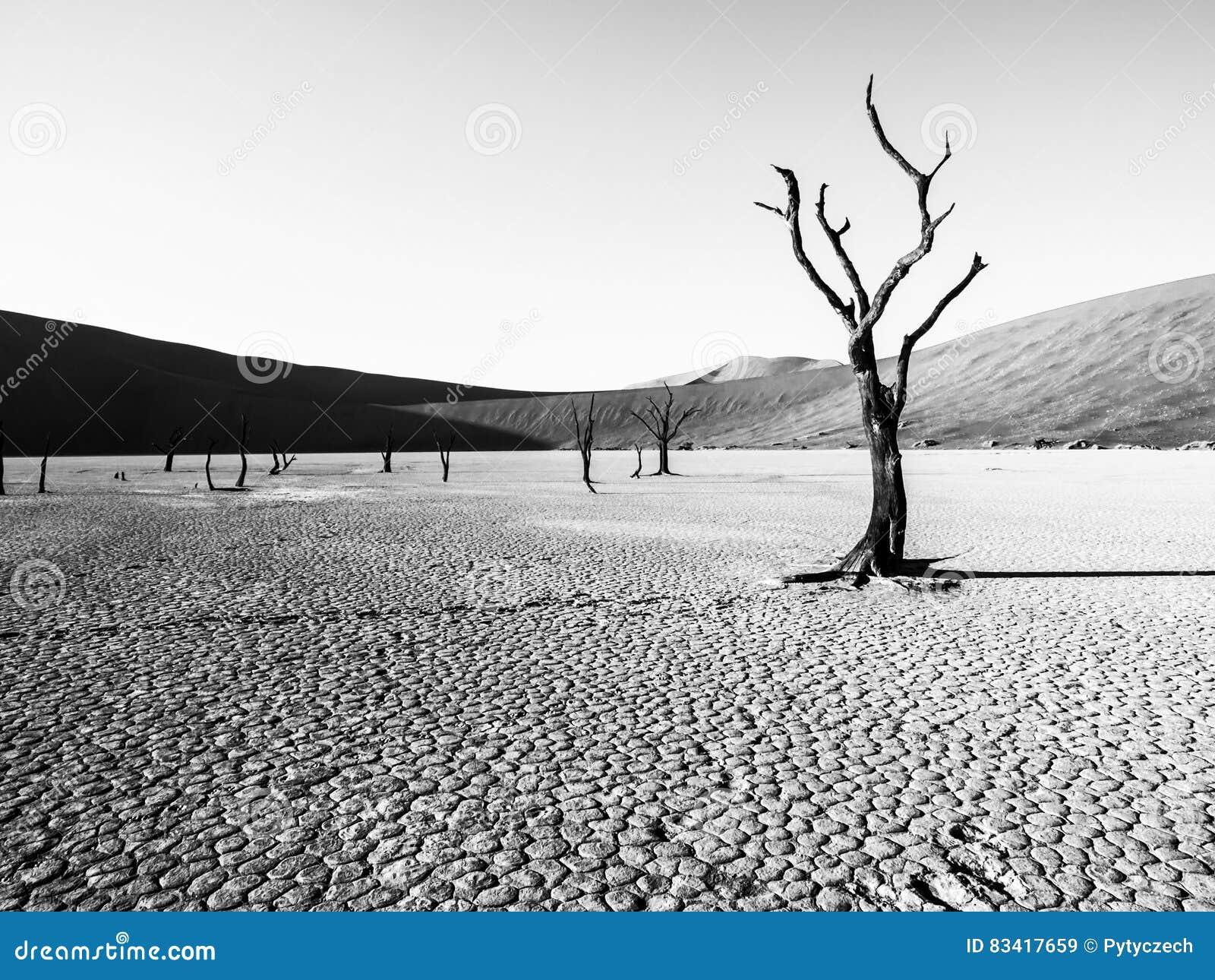 Ödelagd torr landscpe med döda kameltaggträd i den Deadvlei pannan Sprucken jord i mitt av röda dyn för Namib öken