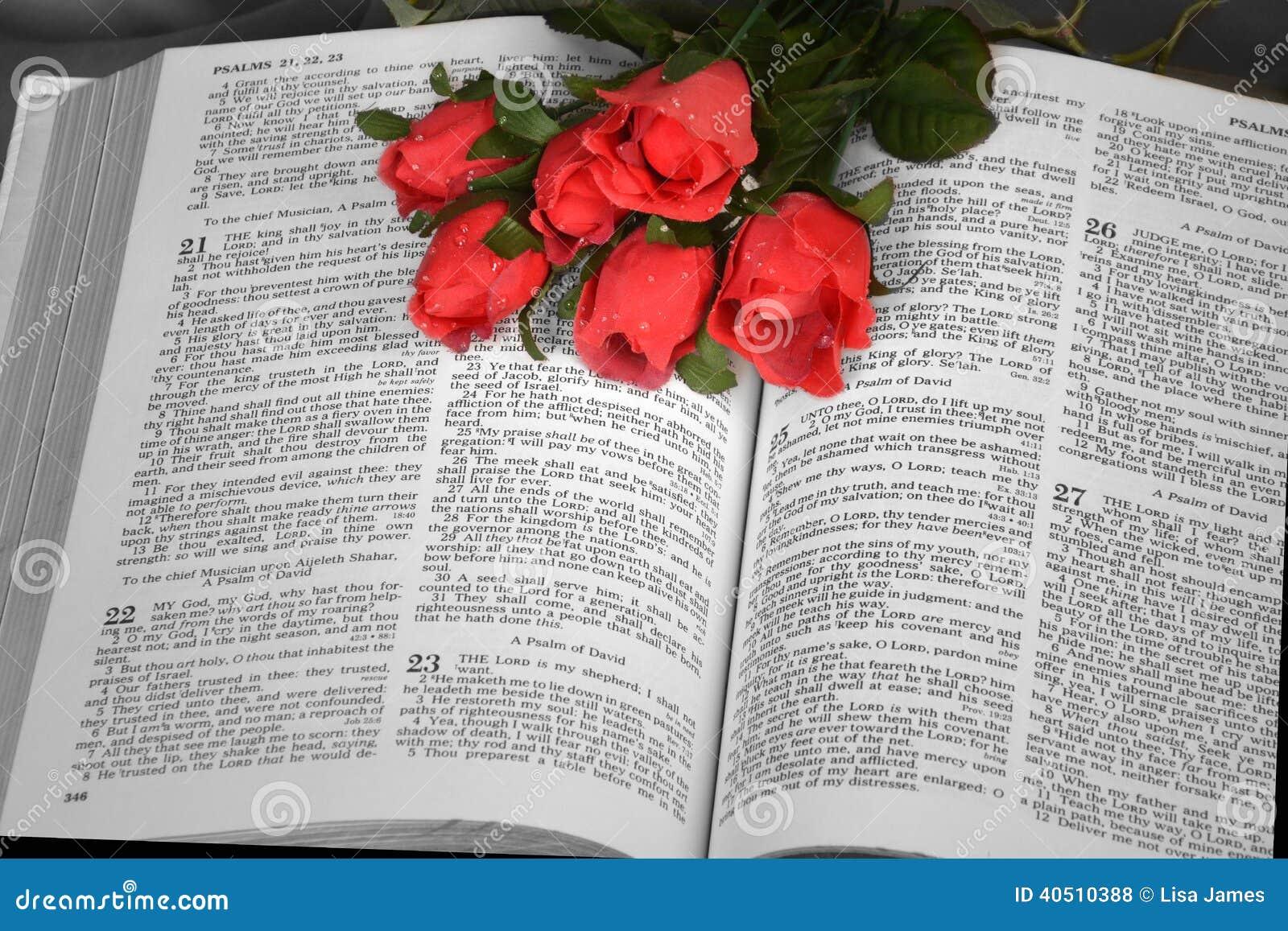 Öffnen Sie Bibel mit roten Rosen
