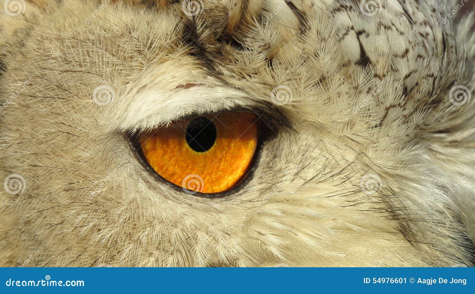Öga av siberianen Eagle Owl