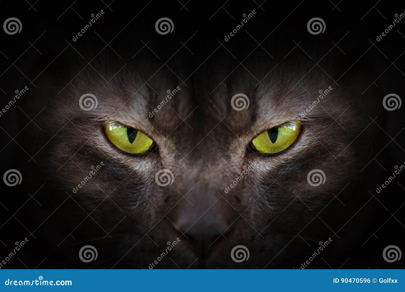 Ögon av den svarta katten i mörker