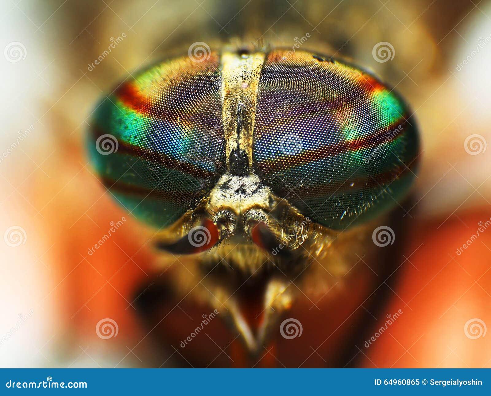 Ögon av ett kryp closeup för huvud för hästfluga